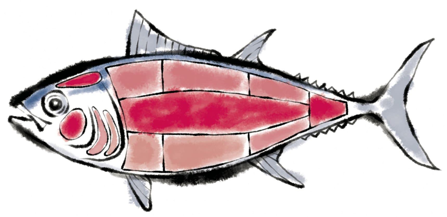 รู้จักเนื้อปลาทูน่า (มากุโร่) แต่ละส่วน