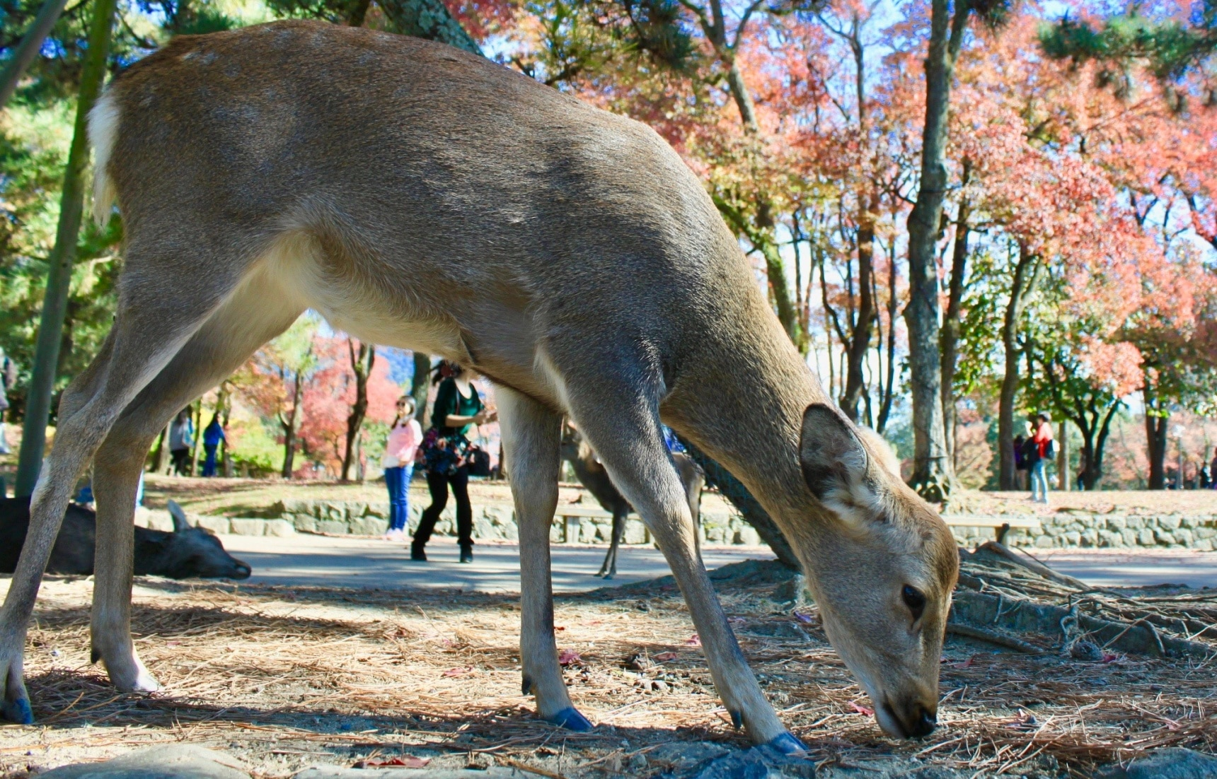 5 Fun Things to Do in Nara