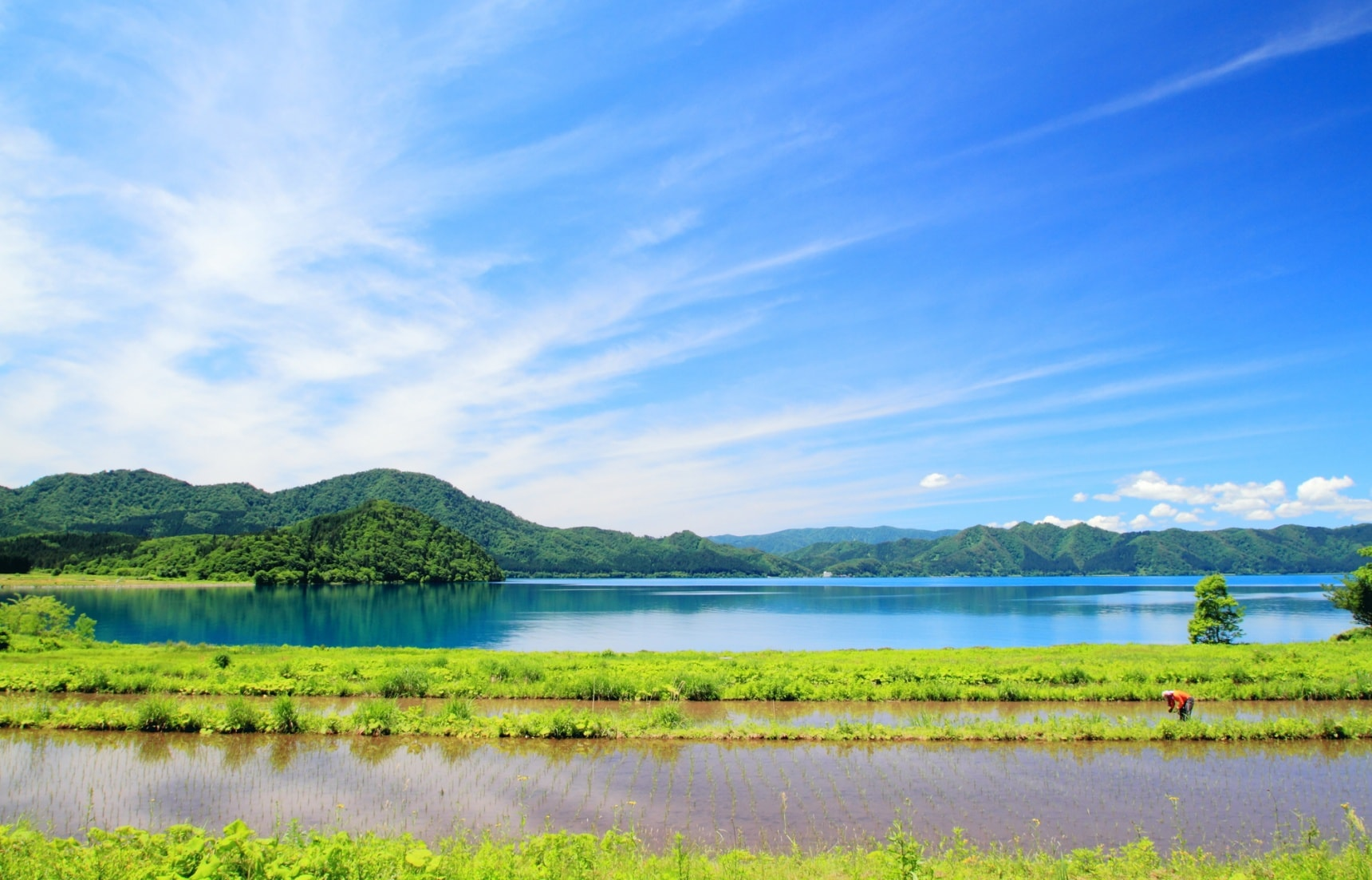 Tohoku in Summertime: Green Means Go!