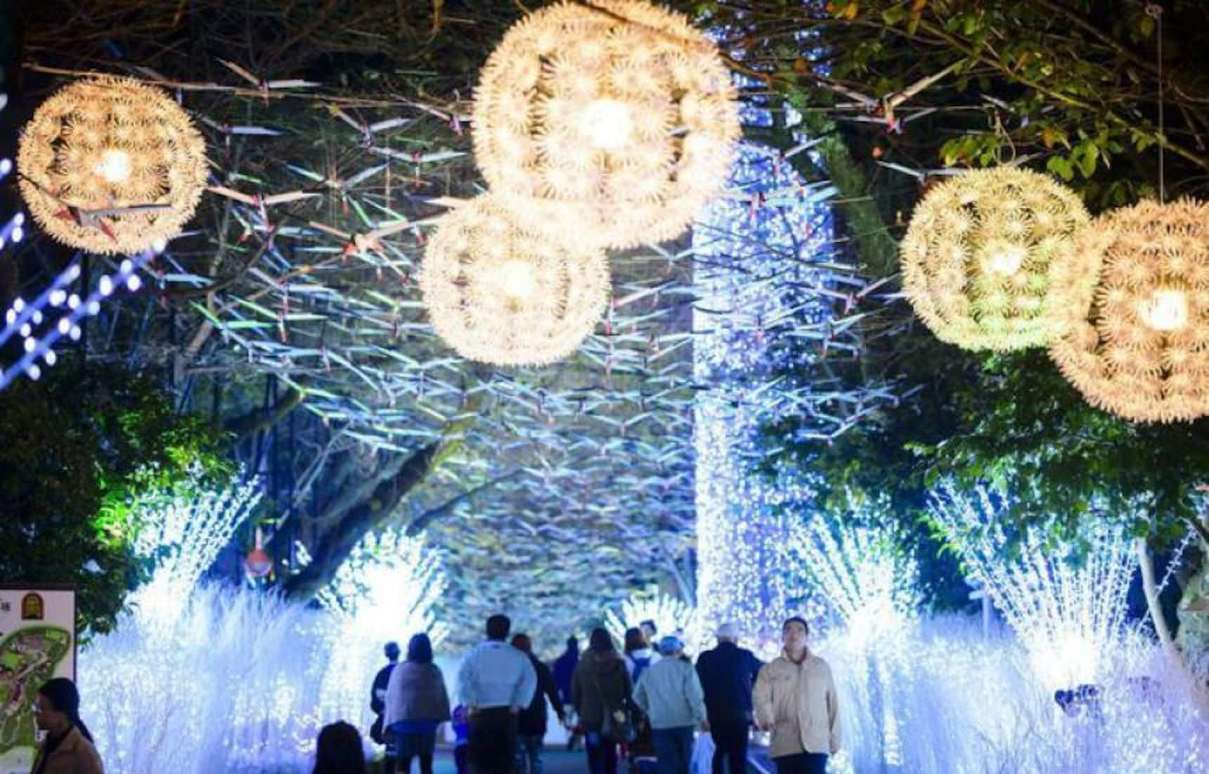 5 Incredible Japanese Illumination Locations