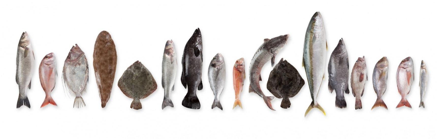 여름철 무더위에 영양 보충하기 좋은 신선한 해산물은?