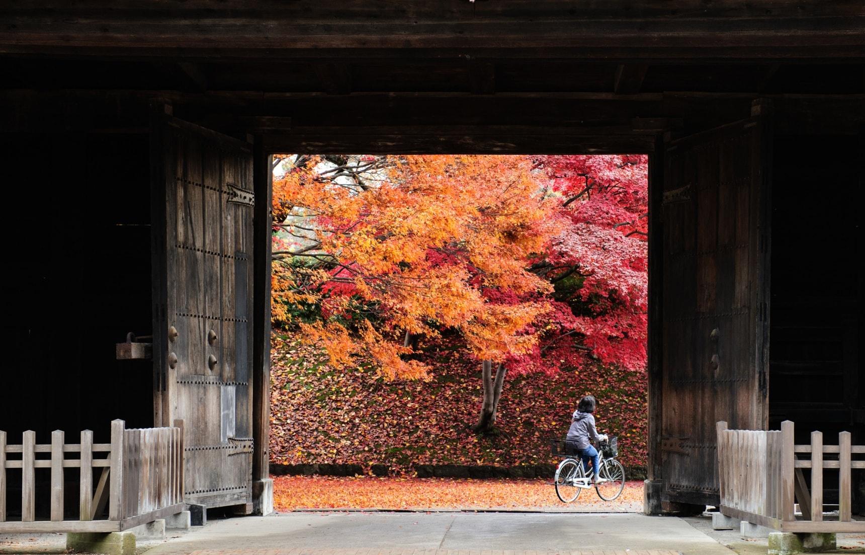 ใบไม้เปลี่ยนสีที่อาโอโมริ