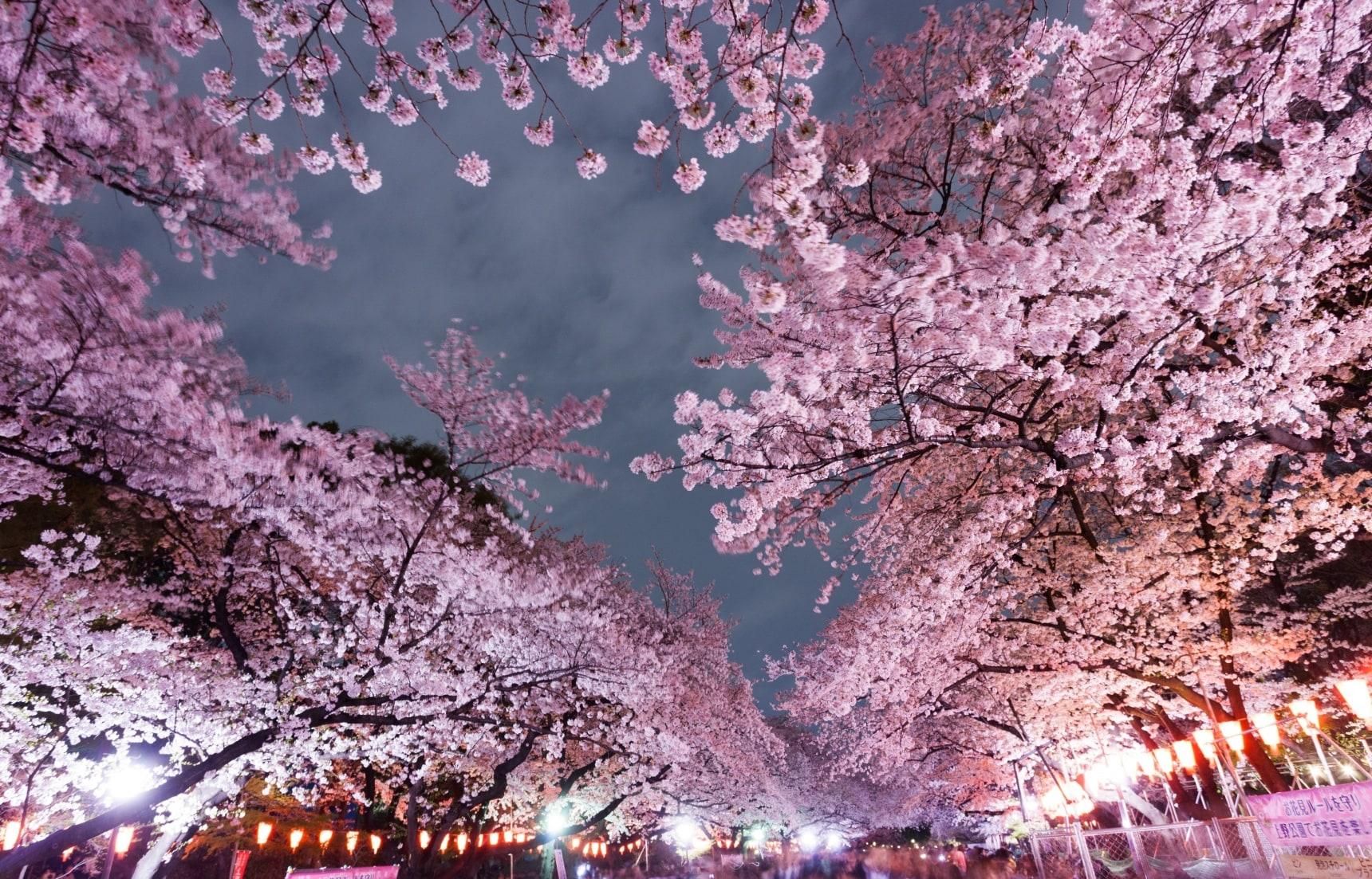 10 สวนสวยที่ชมดอกไม้และใบไม้แดงในกรุงโตเกียว