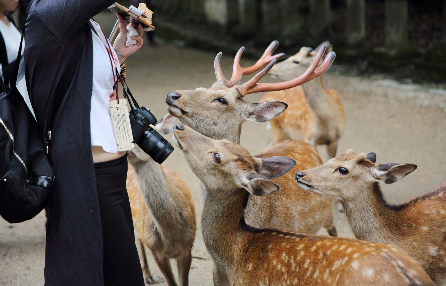 10 ที่เที่ยวไม่ควรพลาดในนารา (Nara)