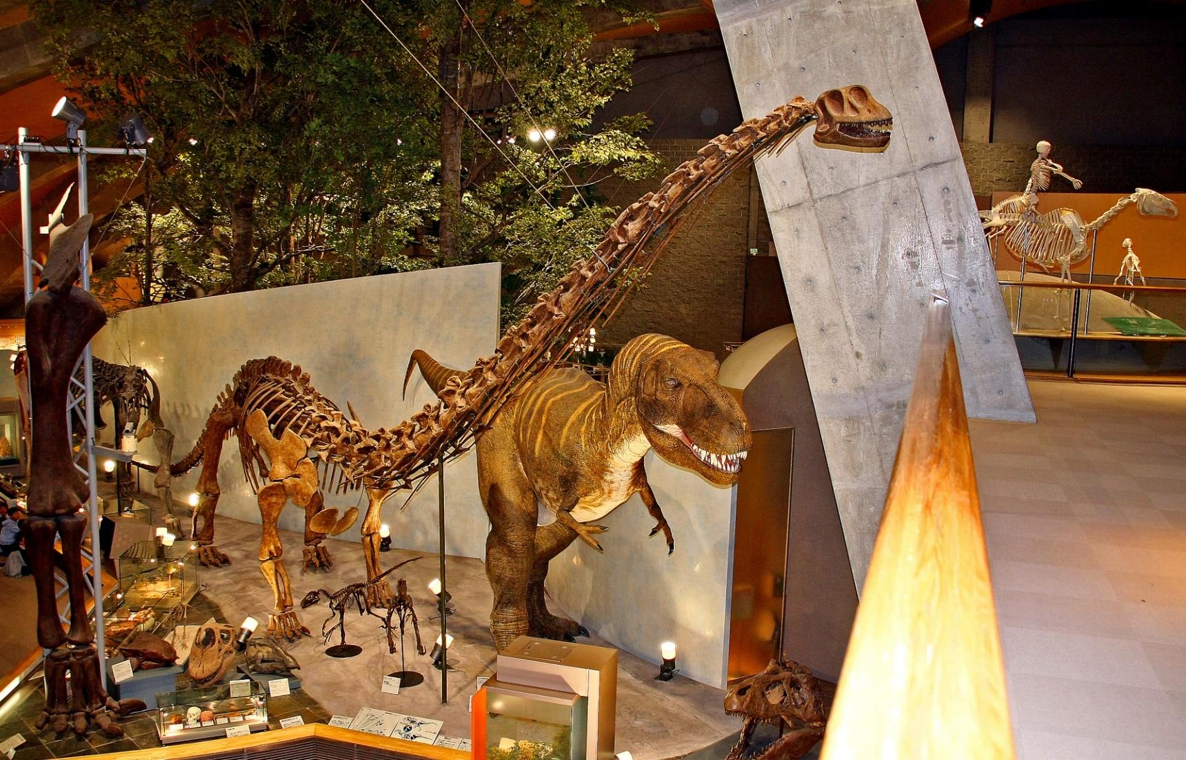 10 พิพิธภัณฑ์ไดโนเสาร์ของญี่ปุ่น