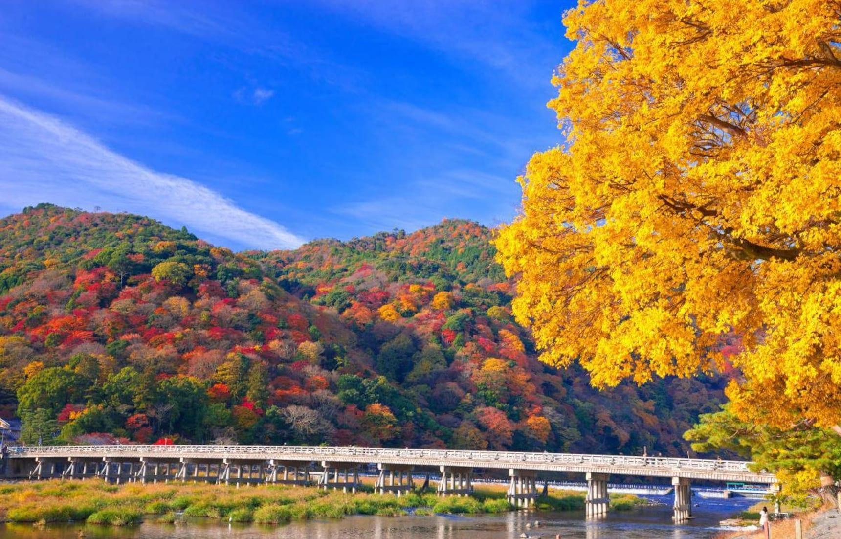 고풍스러운 교토에서 맞이하는 가을 풍경