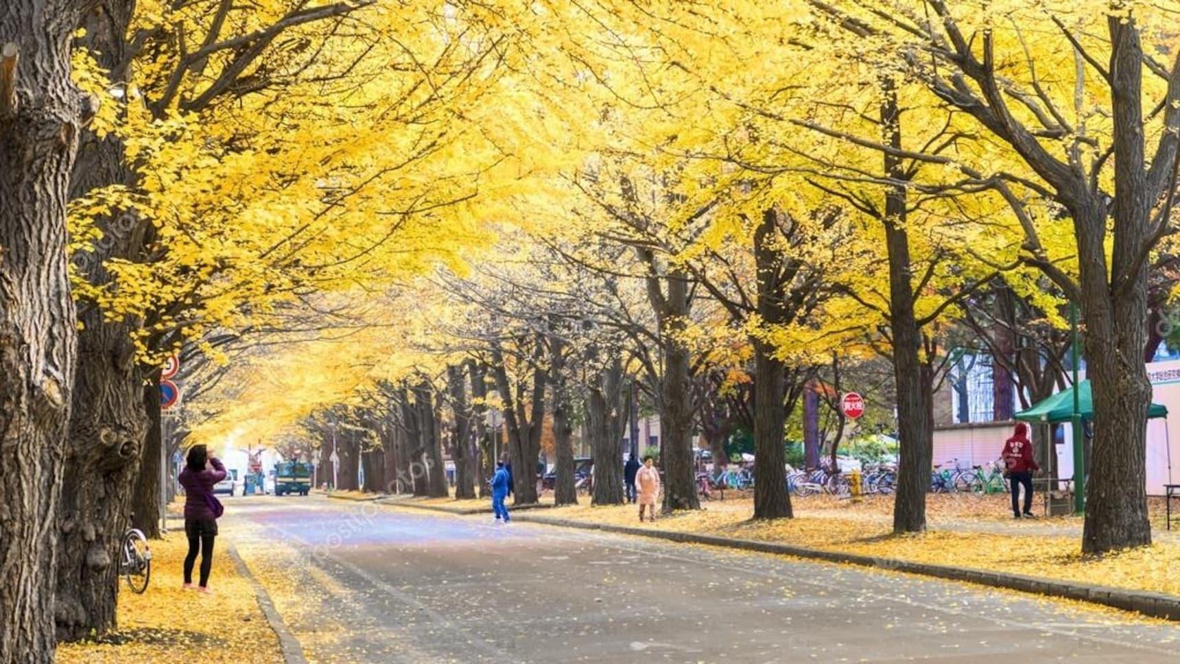 홋카이도에서 즐기는 가을 관광지 BEST 3