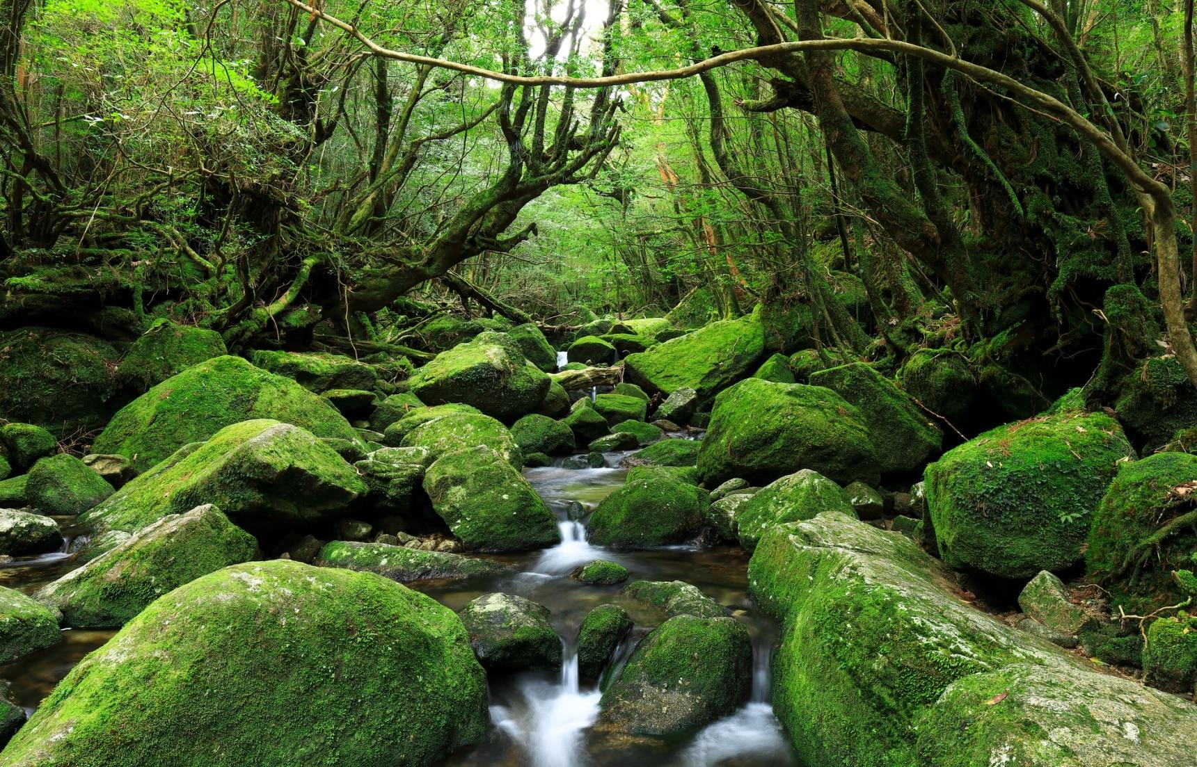 【鹿兒島自由行】屏住呼吸!到原始森林秘境「屋久島」擁抱自然享受最美的感動