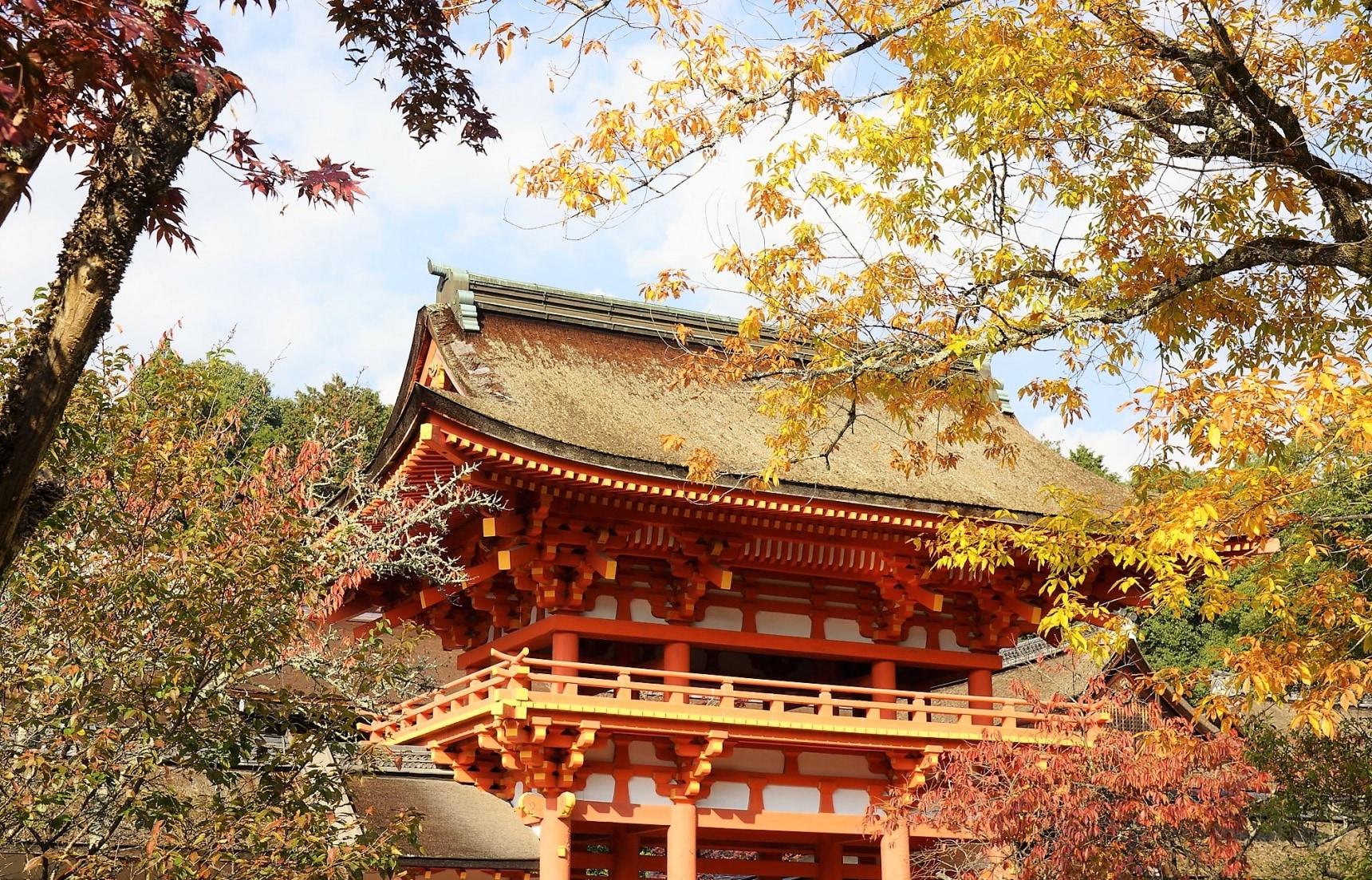 【京都自由行】參拜能量景點「上賀茂神社」再逛市集!追楓者別錯過~秋季御守限定販售中!