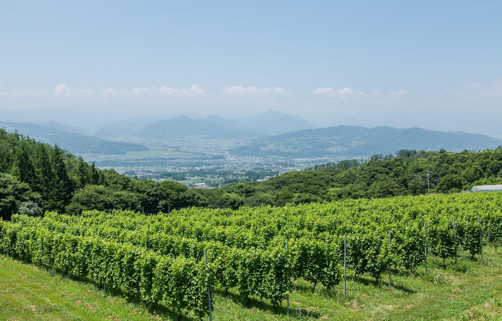 Mastering Winemaking in Nagano