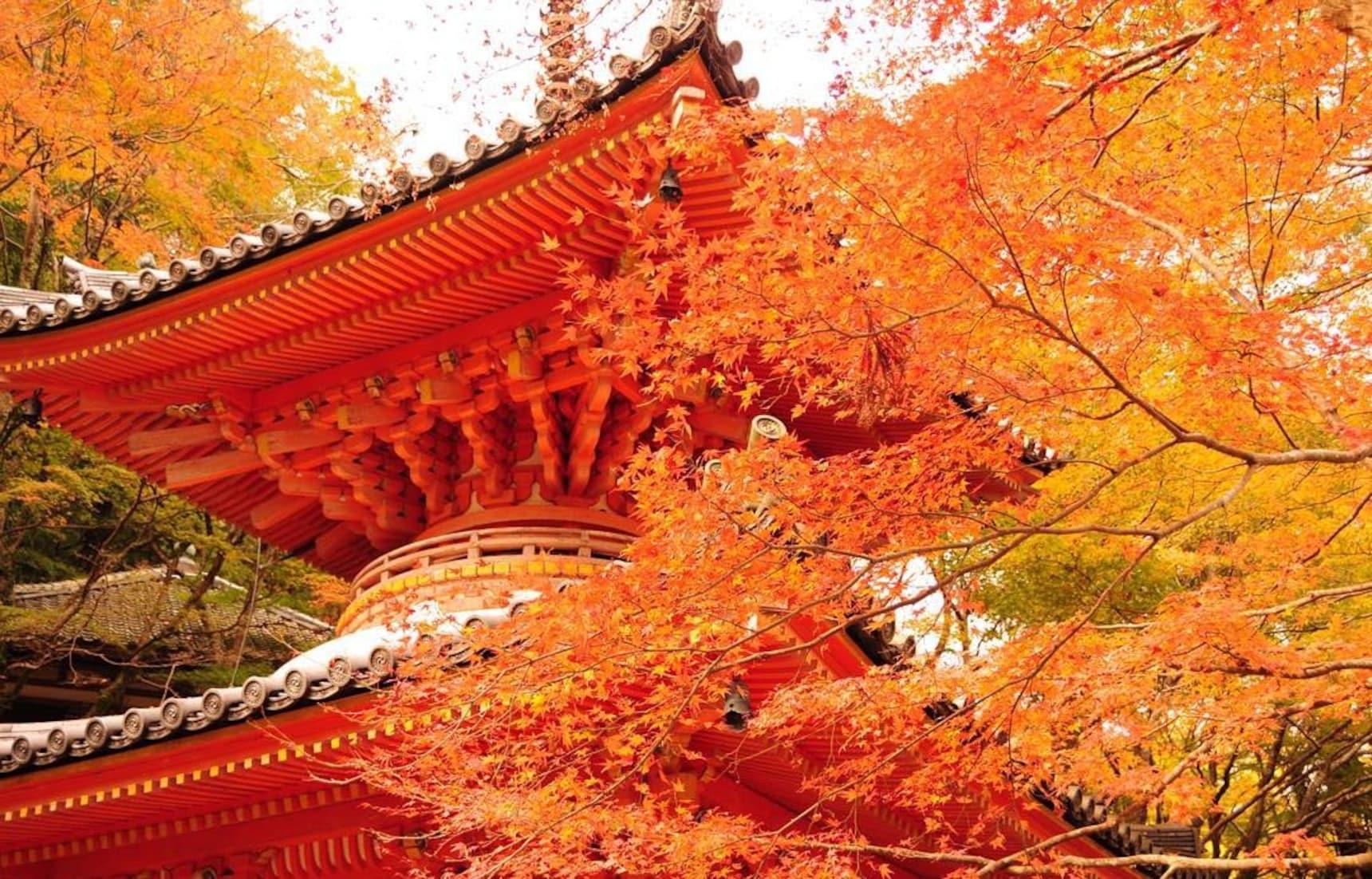 오사카 최고의 단풍 명소 2부