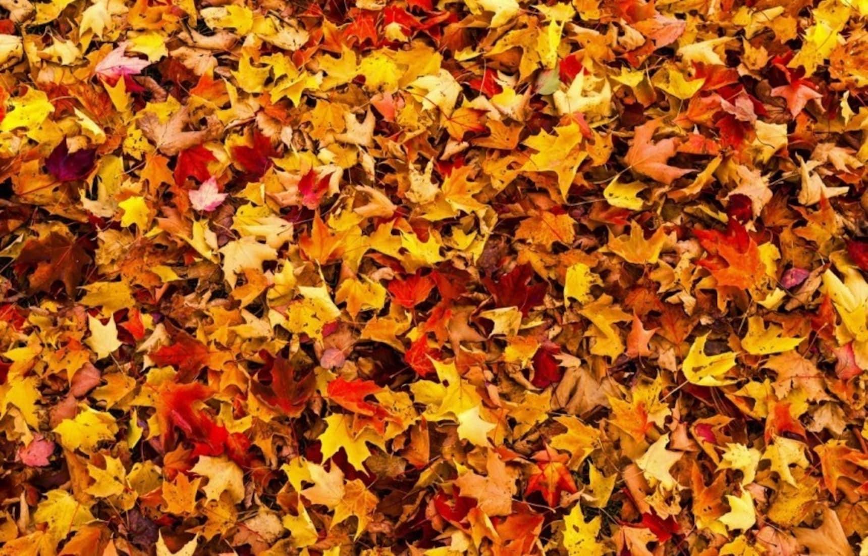 일년 내내 볼거리가 풍성한 오사카에서 즐기는 가을 풍경