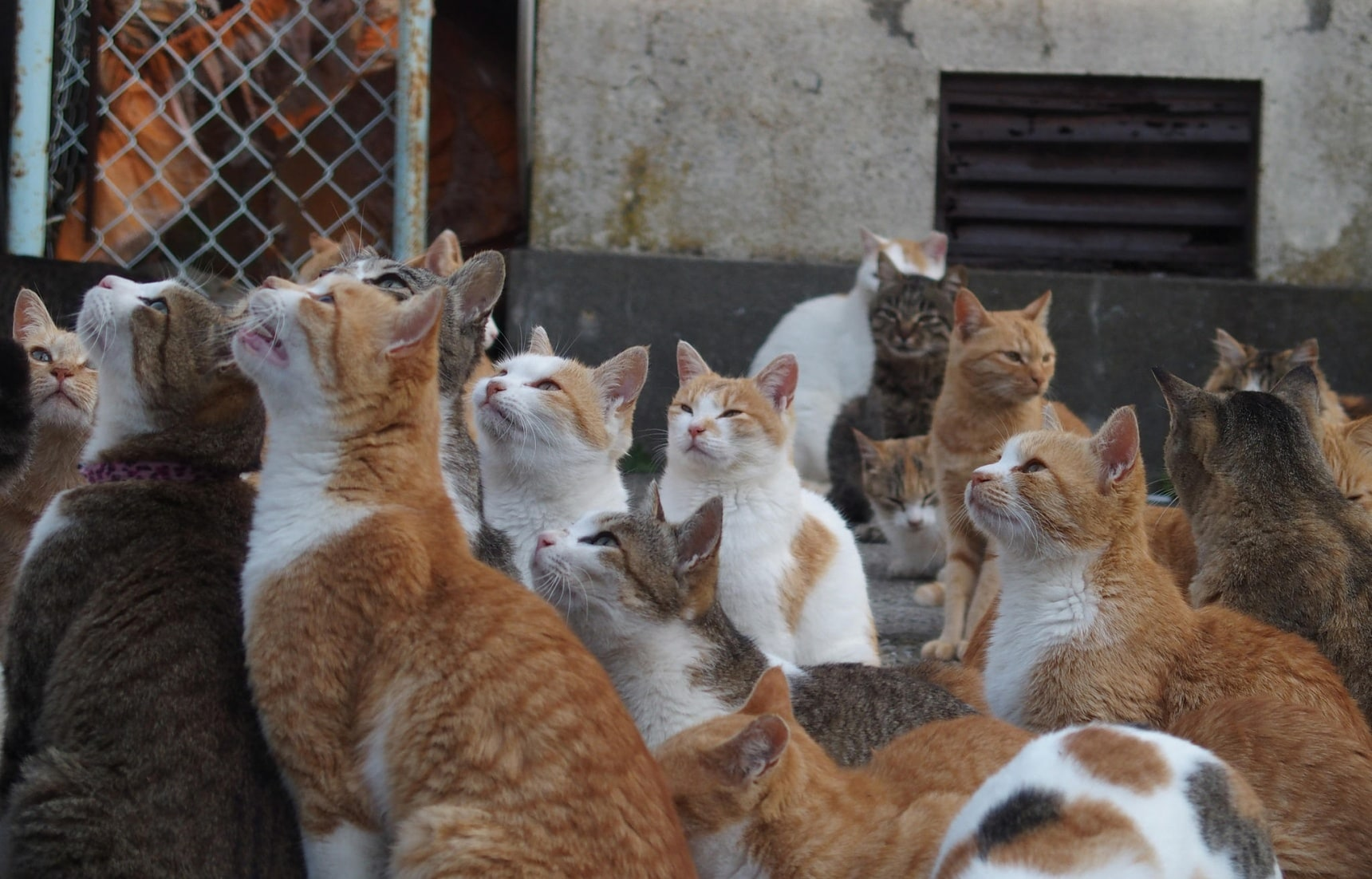 6สถานที่เล่นกับสัตว์โลกน่ารักทั่วญี่ปุ่น