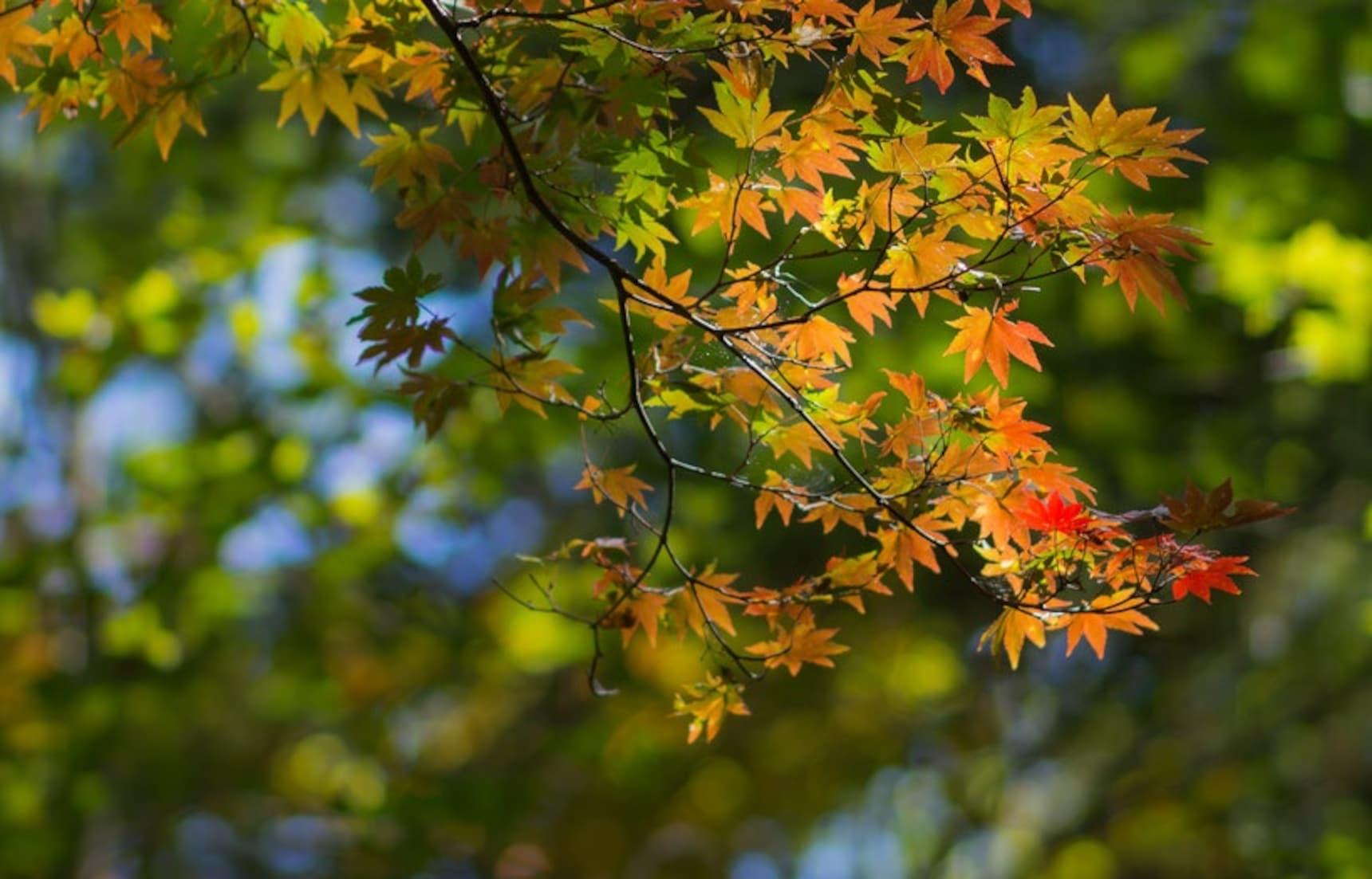 알록달록 물든 오쿠닛코산에서 바라보는 가을