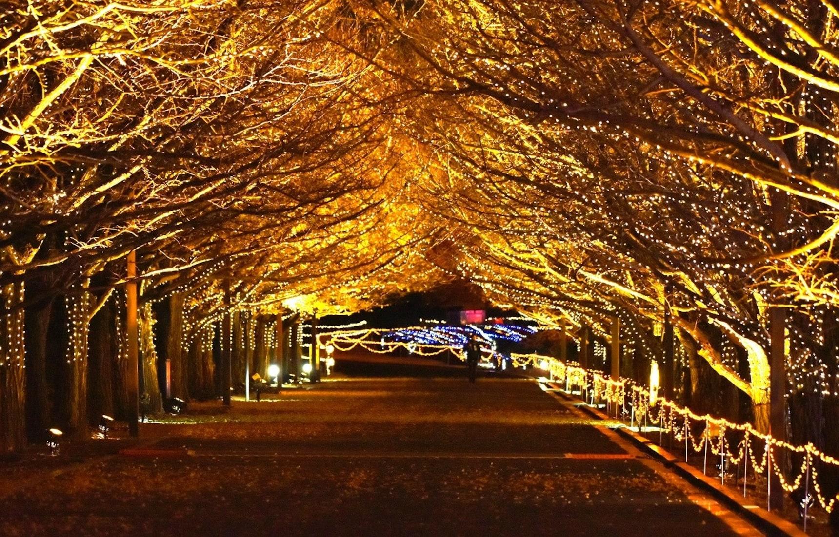 【東京自由行】2019-20聖誕繽紛燈飾巡禮地圖(內文資訊持續更新中)