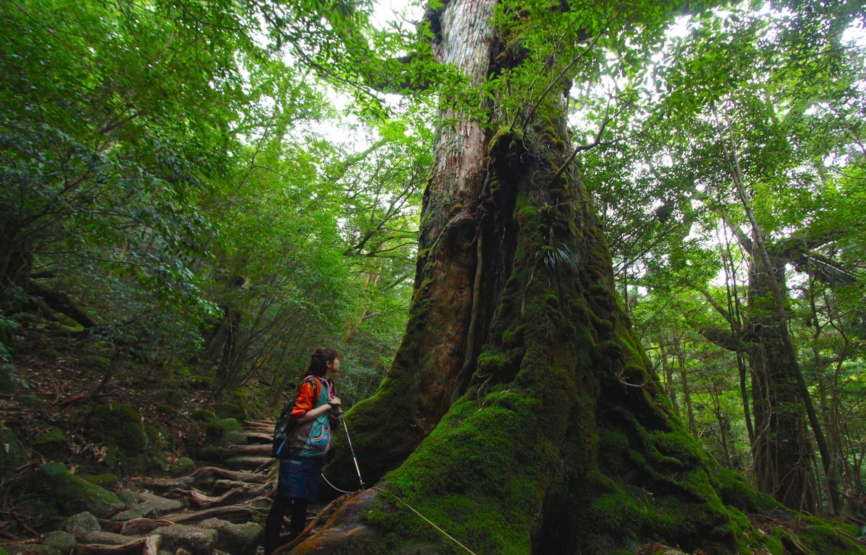 Yakushima: Island of Thousand-Year-Old Cedars