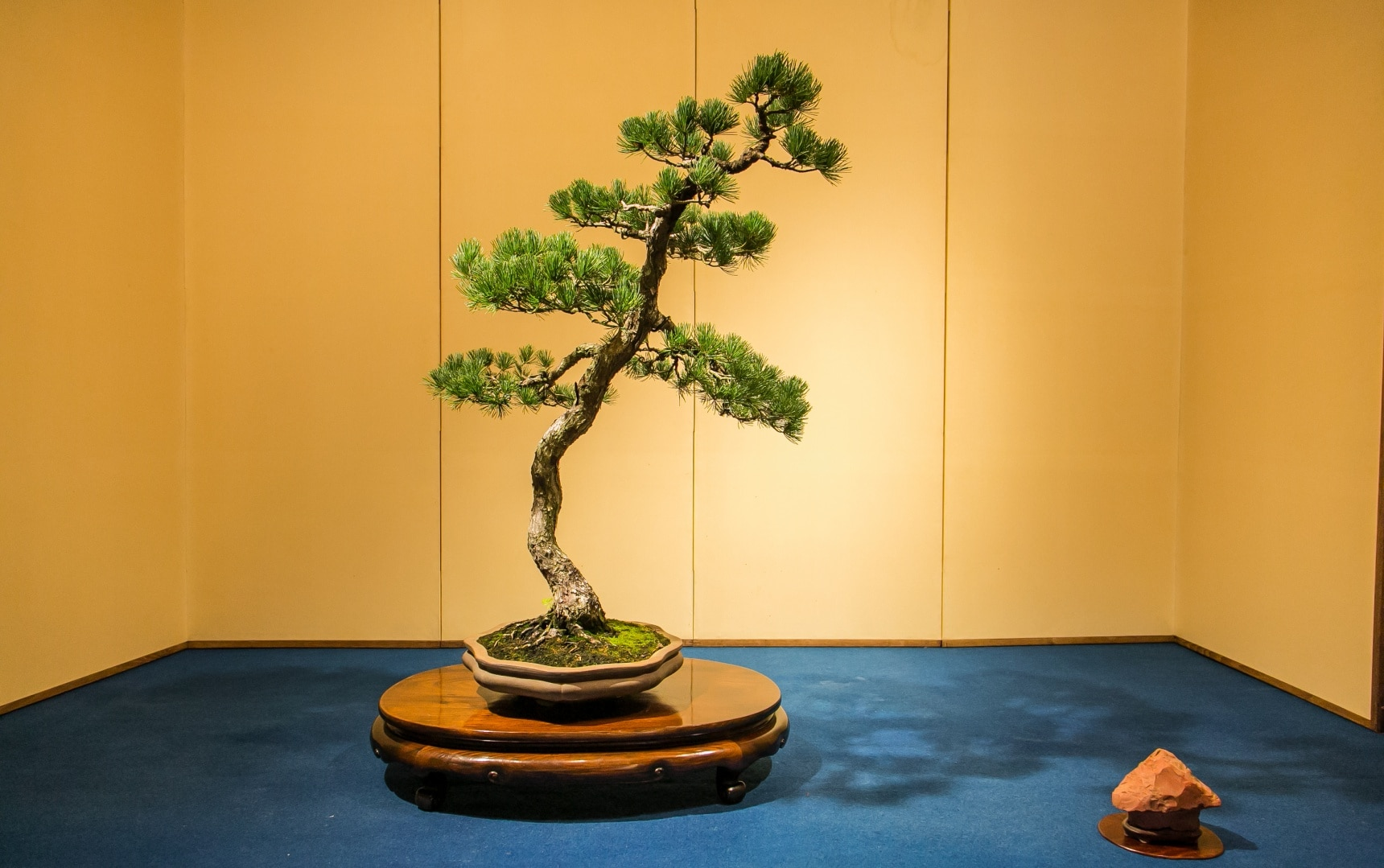 The Living Appeal of Bonsai Art