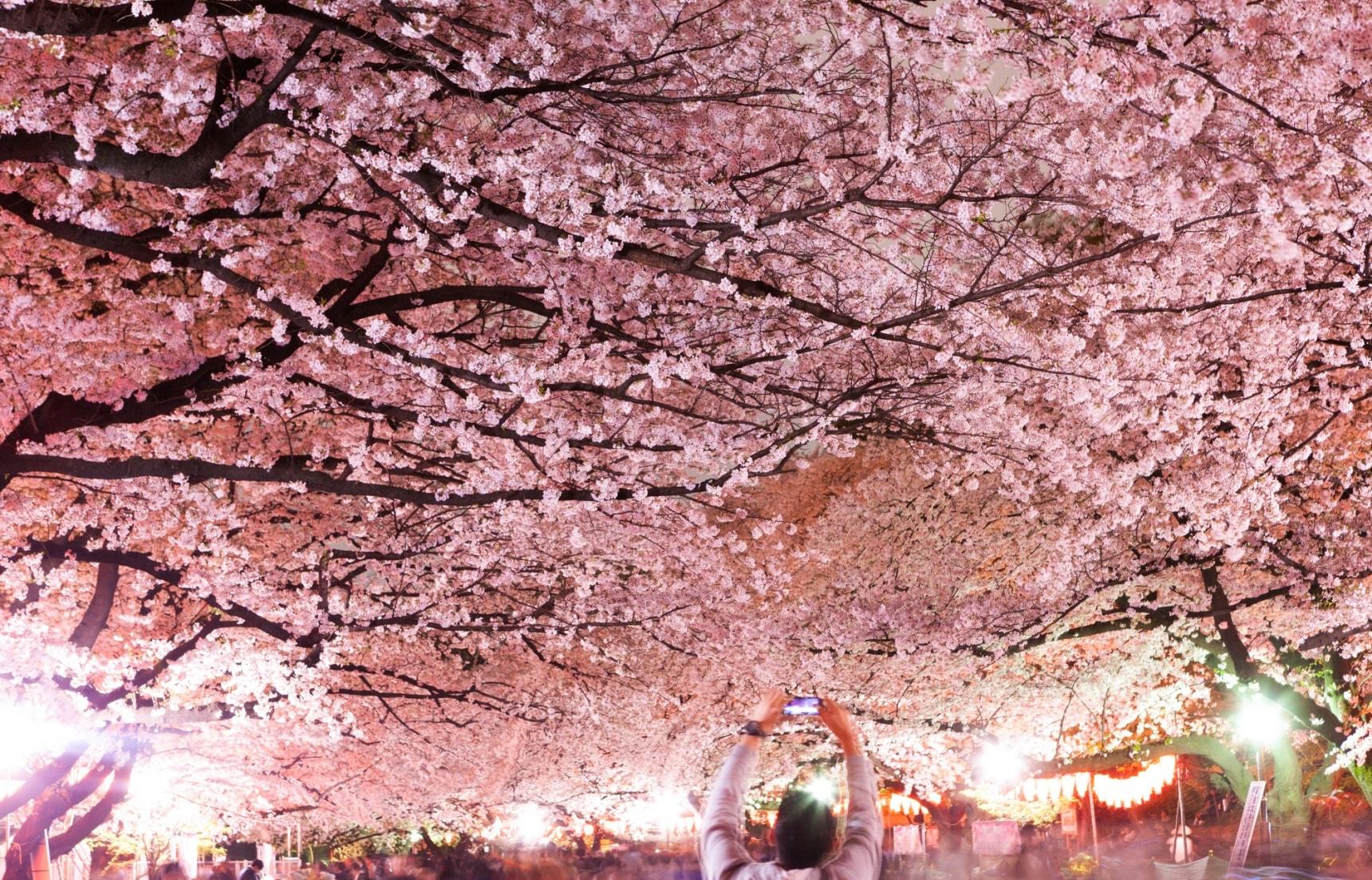 5 จุดชมซากุระที่ไม่ควรพลาดในโตเกียว