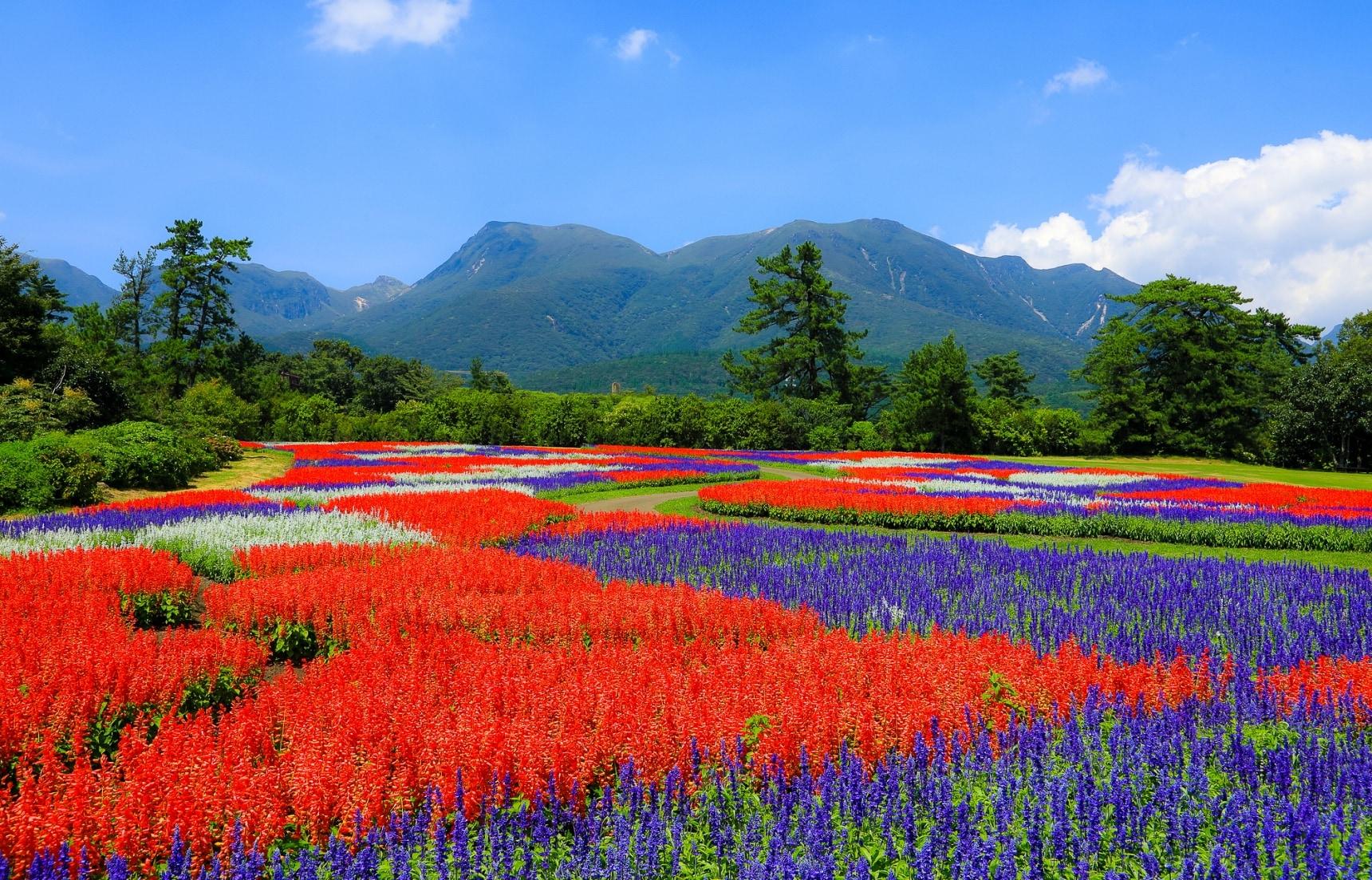 แนะนำ 5 สถานที่ชมดอกไม้ในคิวชู (Kyushu)