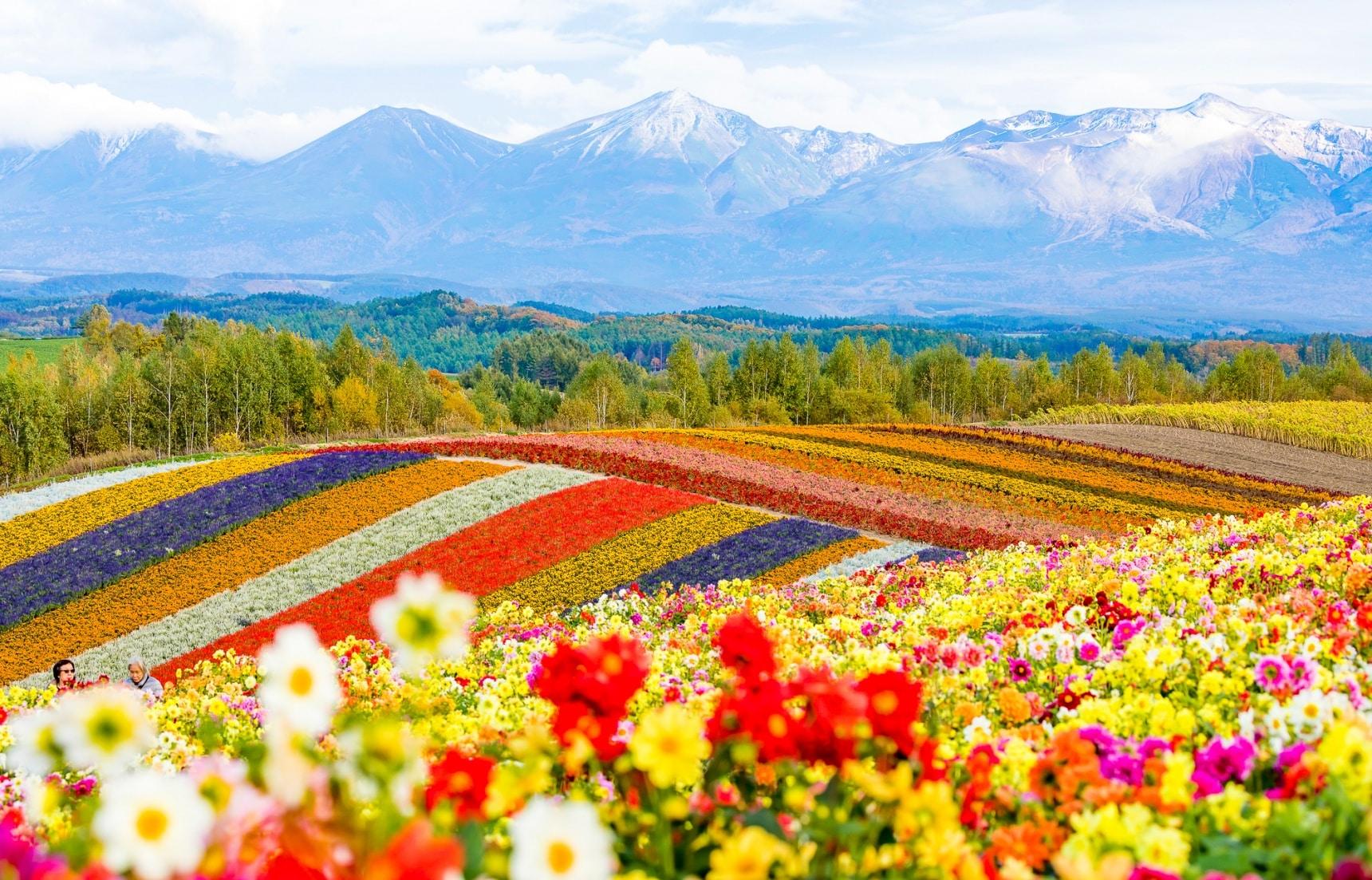ที่สุดแห่งจุดชมดอกไม้ในฮอกไกโด
