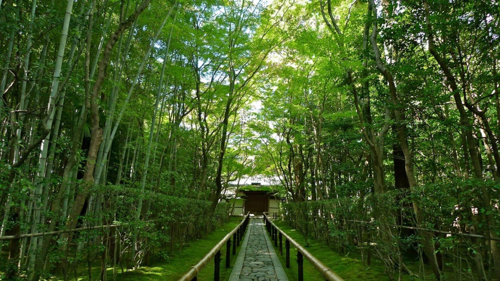 5 ที่เที่ยวลับๆ ในเกียวโตที่อยากให้คุณรู้จัก