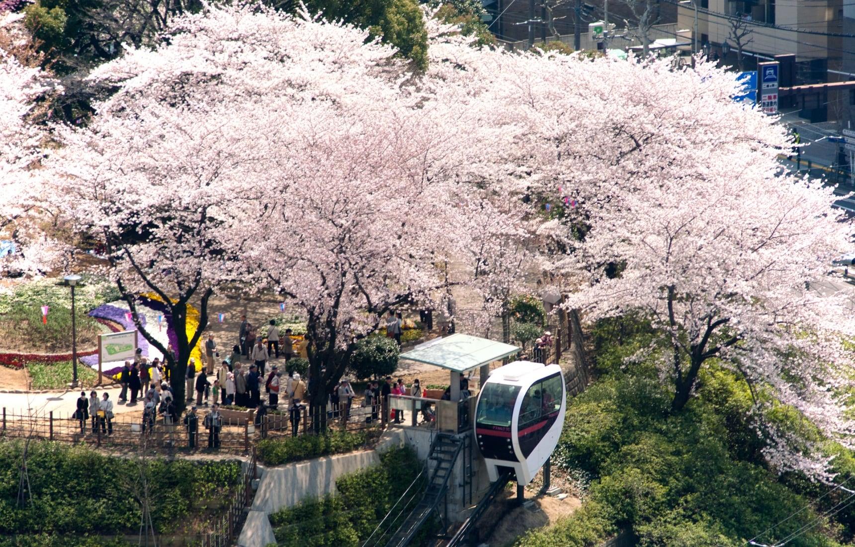 แนะนำ 7 สถานที่ท่องเที่ยวเข้าฟรีในโตเกียว