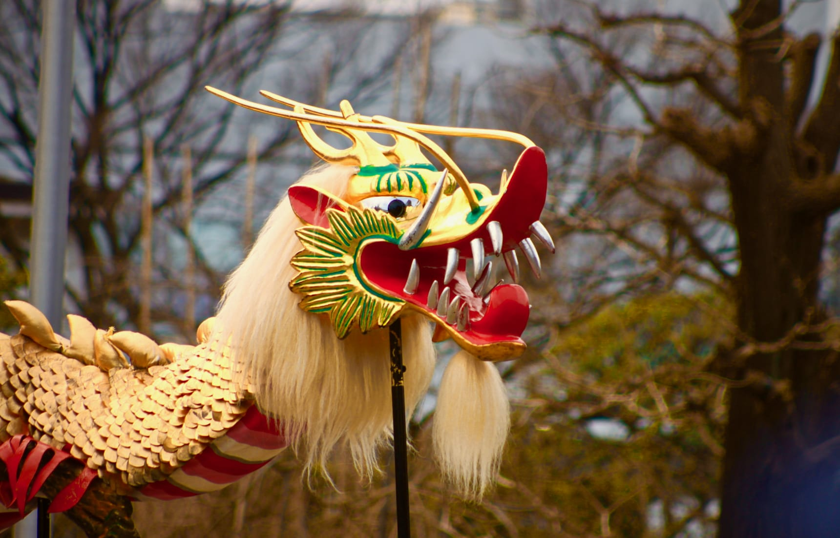 Experience the Dance of the Golden Dragon