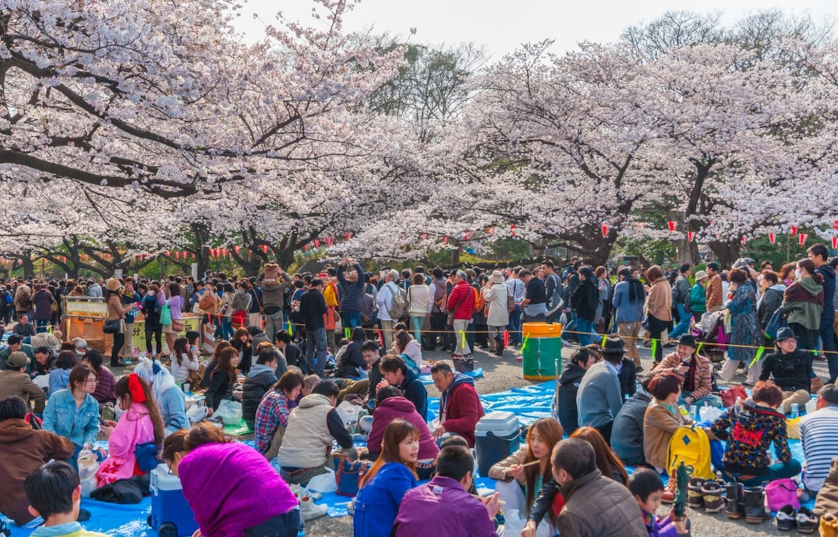 Tokyo Hanami Hot Spot: Ueno Park