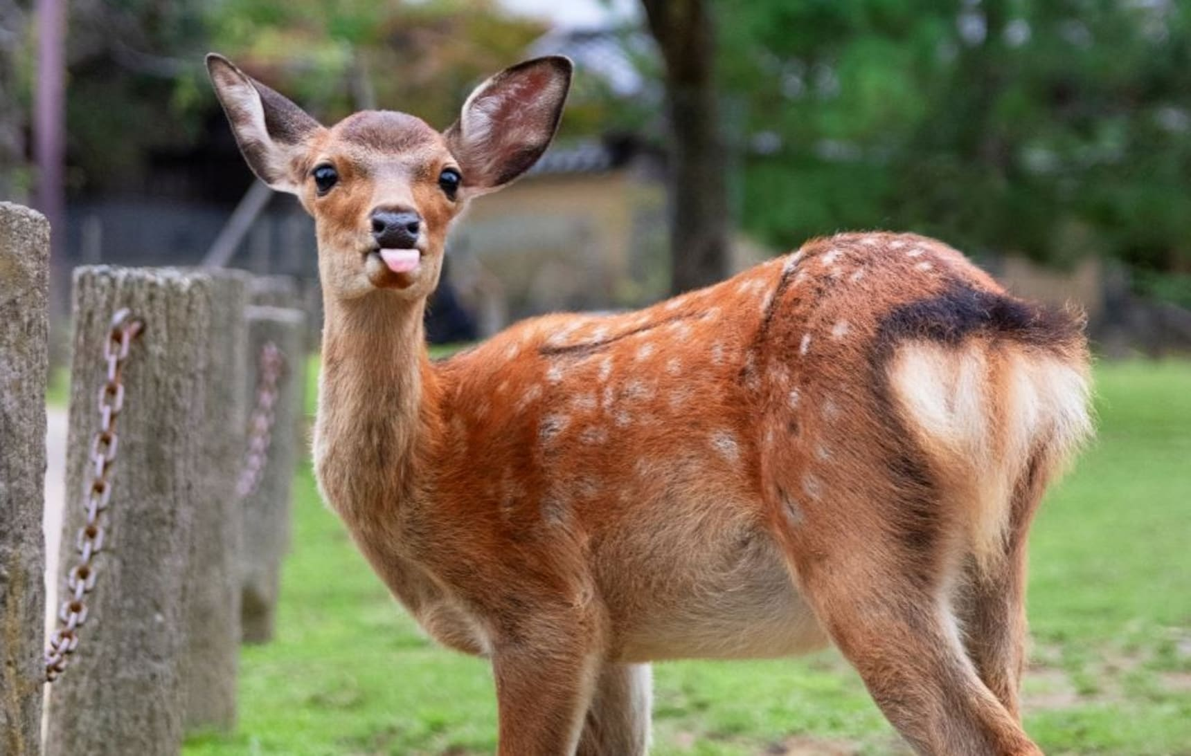 The Many Expressions of Nara's Deer