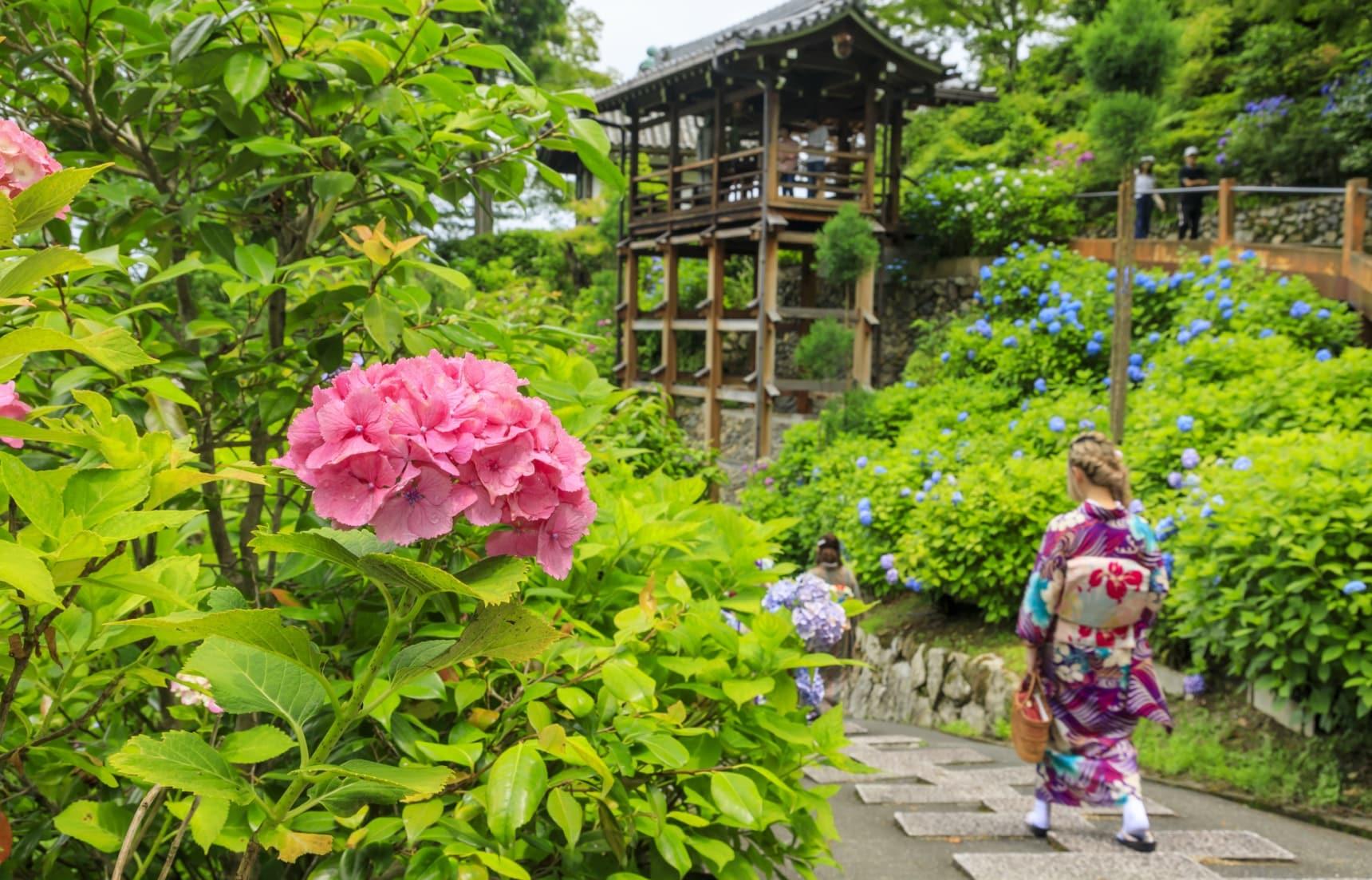 紫陽花開!漫步日本各地遇見初夏好風光