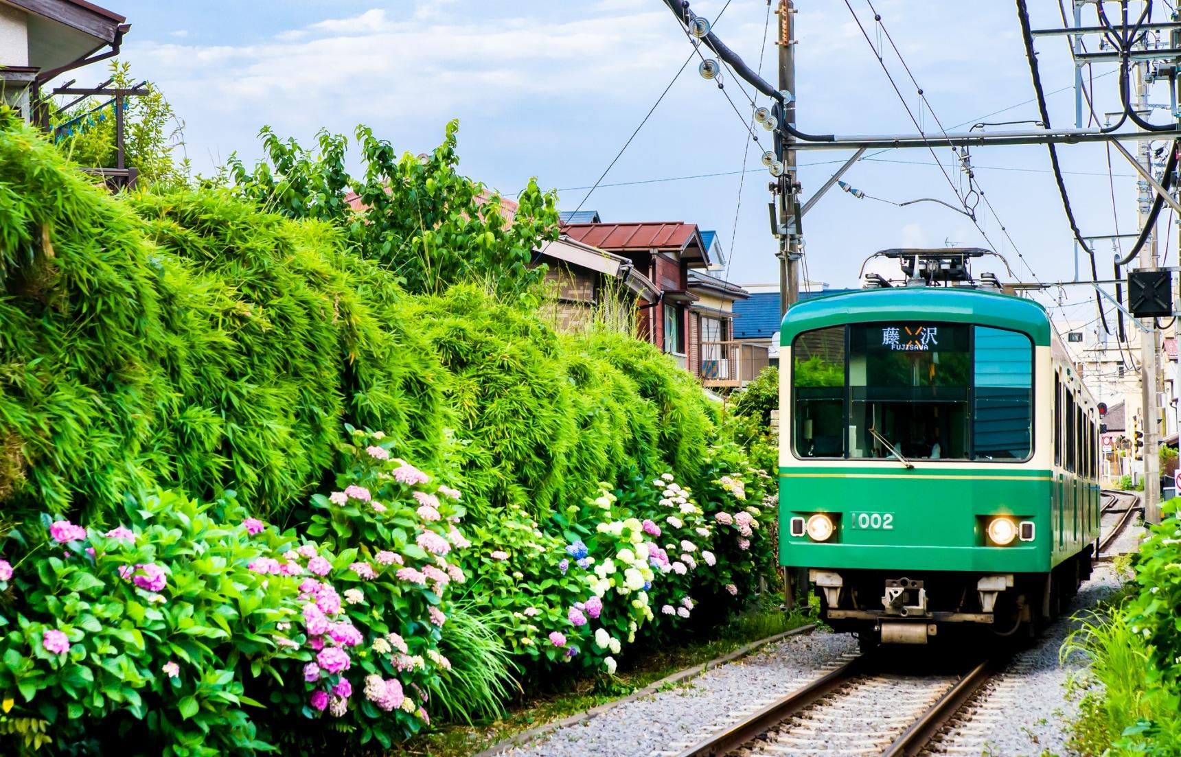 【神奈川自由行】日本初夏必訪!人氣絕頂的鎌倉紫陽花私房景點