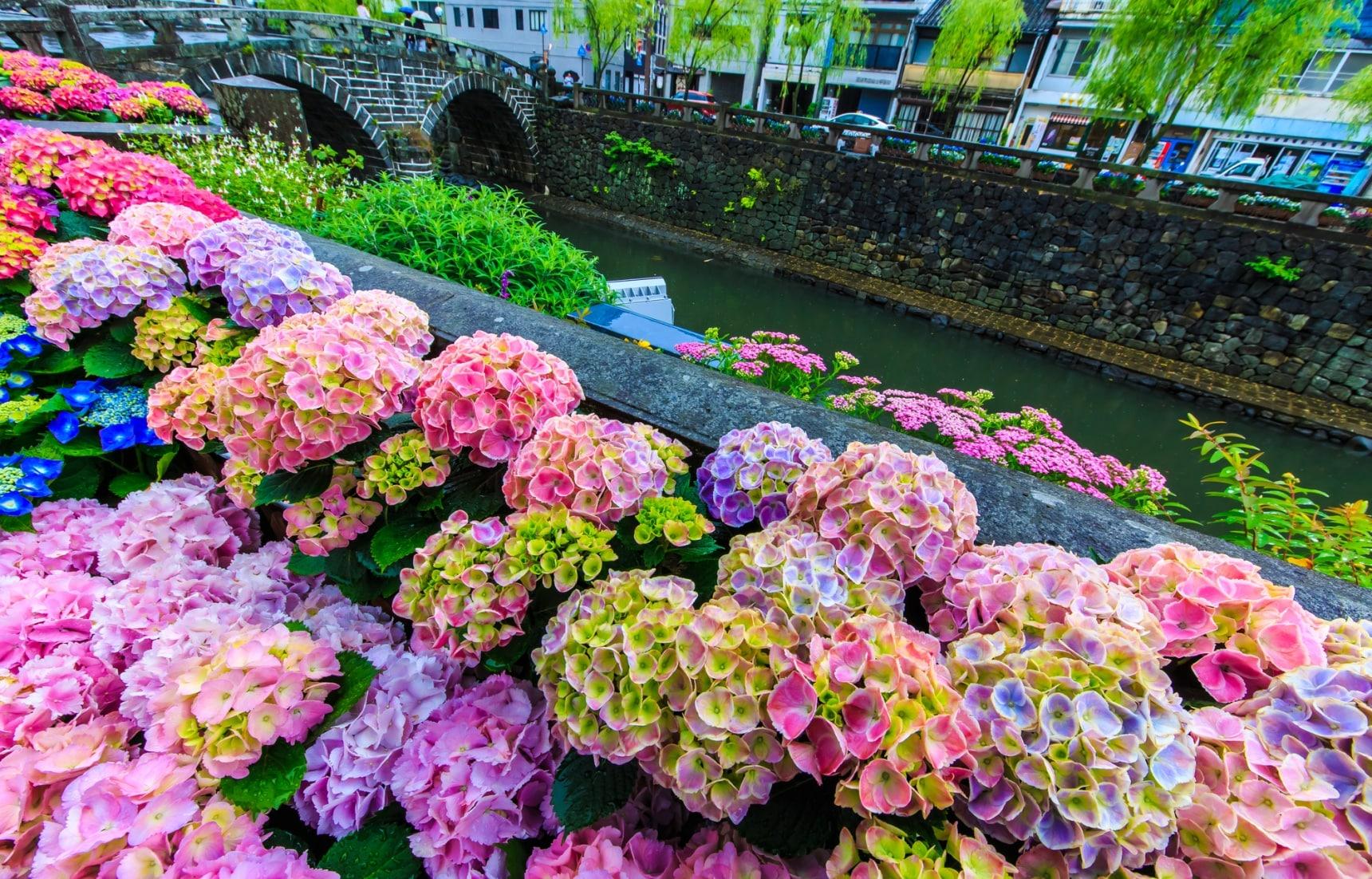 日本梅雨季限定!丟掉濕熱迎接繽紛的紫陽花
