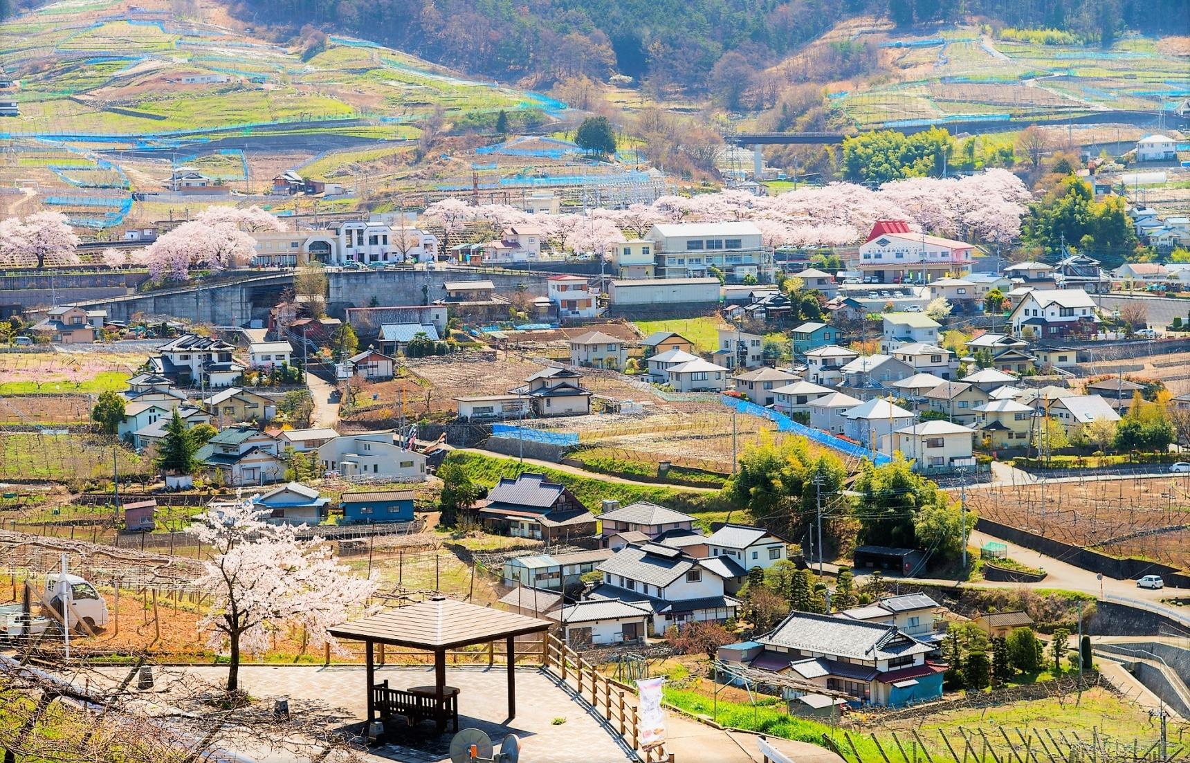 【帶著爸媽自駕遊日本|山梨縣・勝沼/笛吹篇】盡享天倫之樂的葡萄鄉美景、美酒與美食之旅