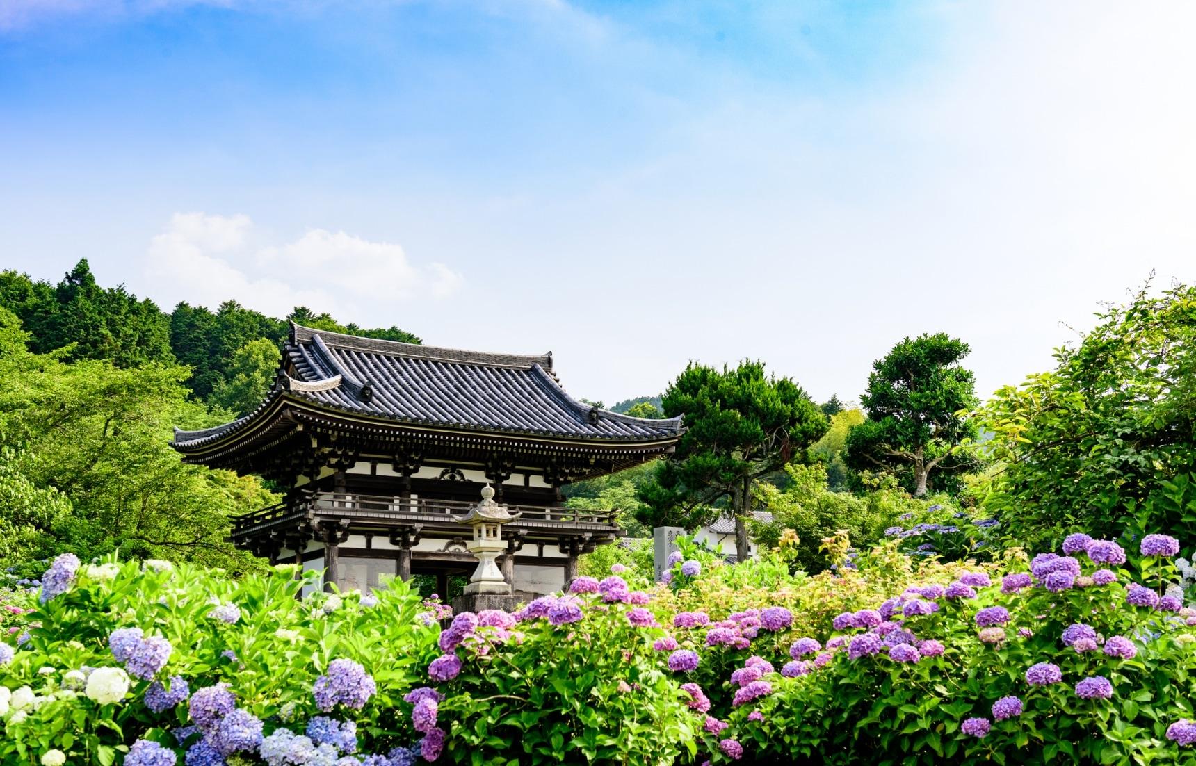 Top 10 Hydrangea Flower Spots in Kyoto