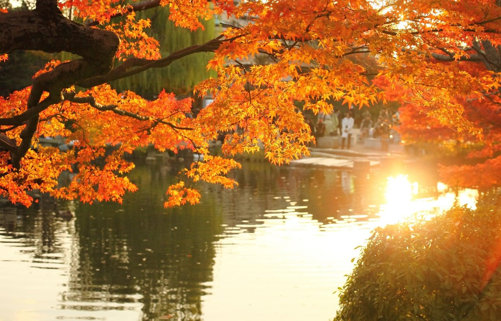 【北海道自由行】搭乘札幌地下鐵賞楓去!札幌市內必去四大紅葉景點