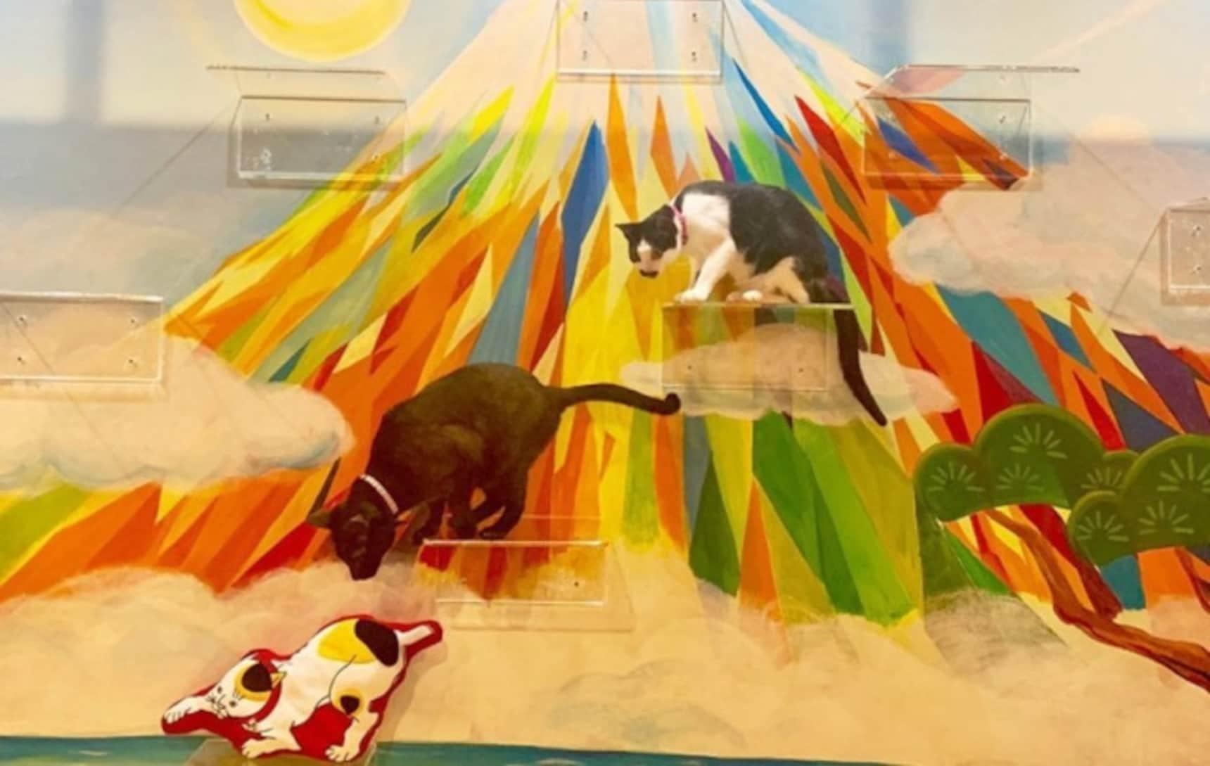 Osaka Café Has Proof That Cats & Baths Do Mix