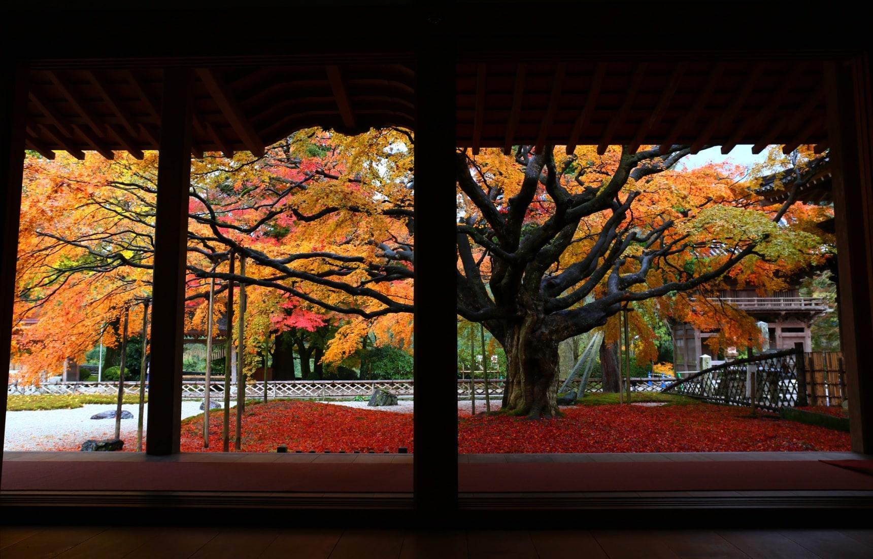 踩踏落地紅葉,頭望滿天楓紅!福岡近郊追楓去!