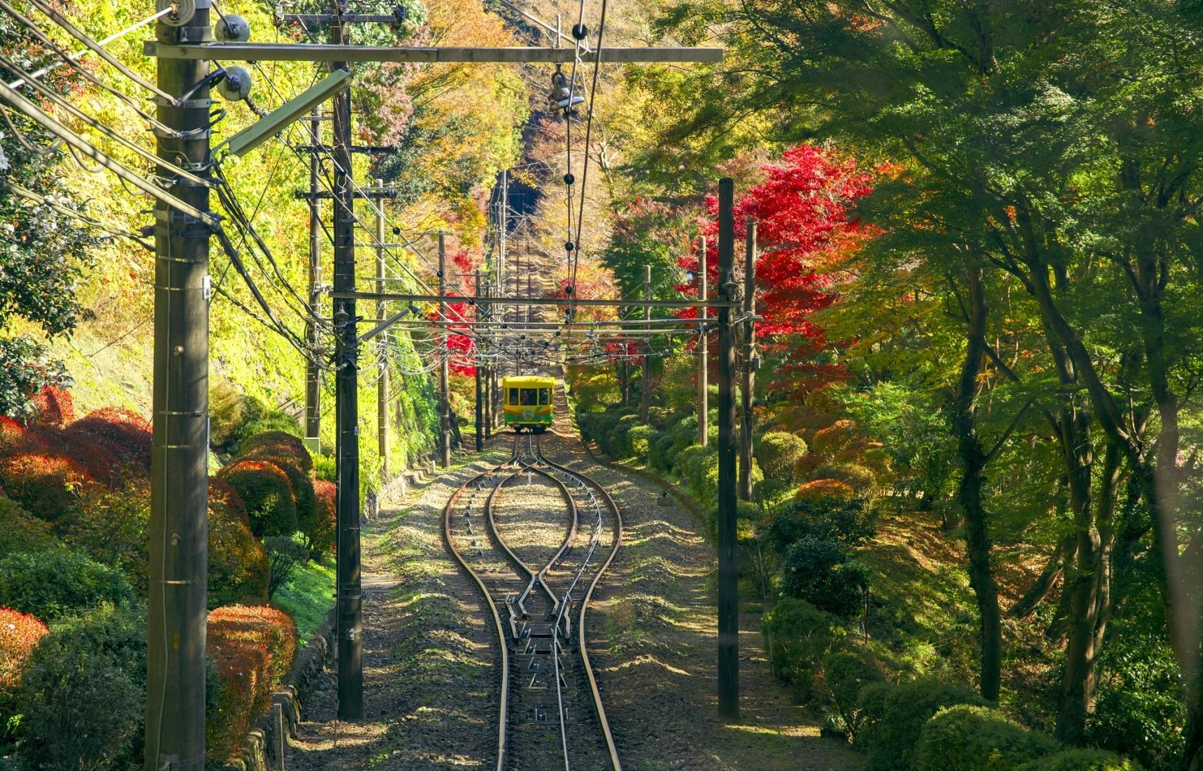 日本秋天賞楓上哪去?獨樹一格的東京郊區銀杏楓紅景點