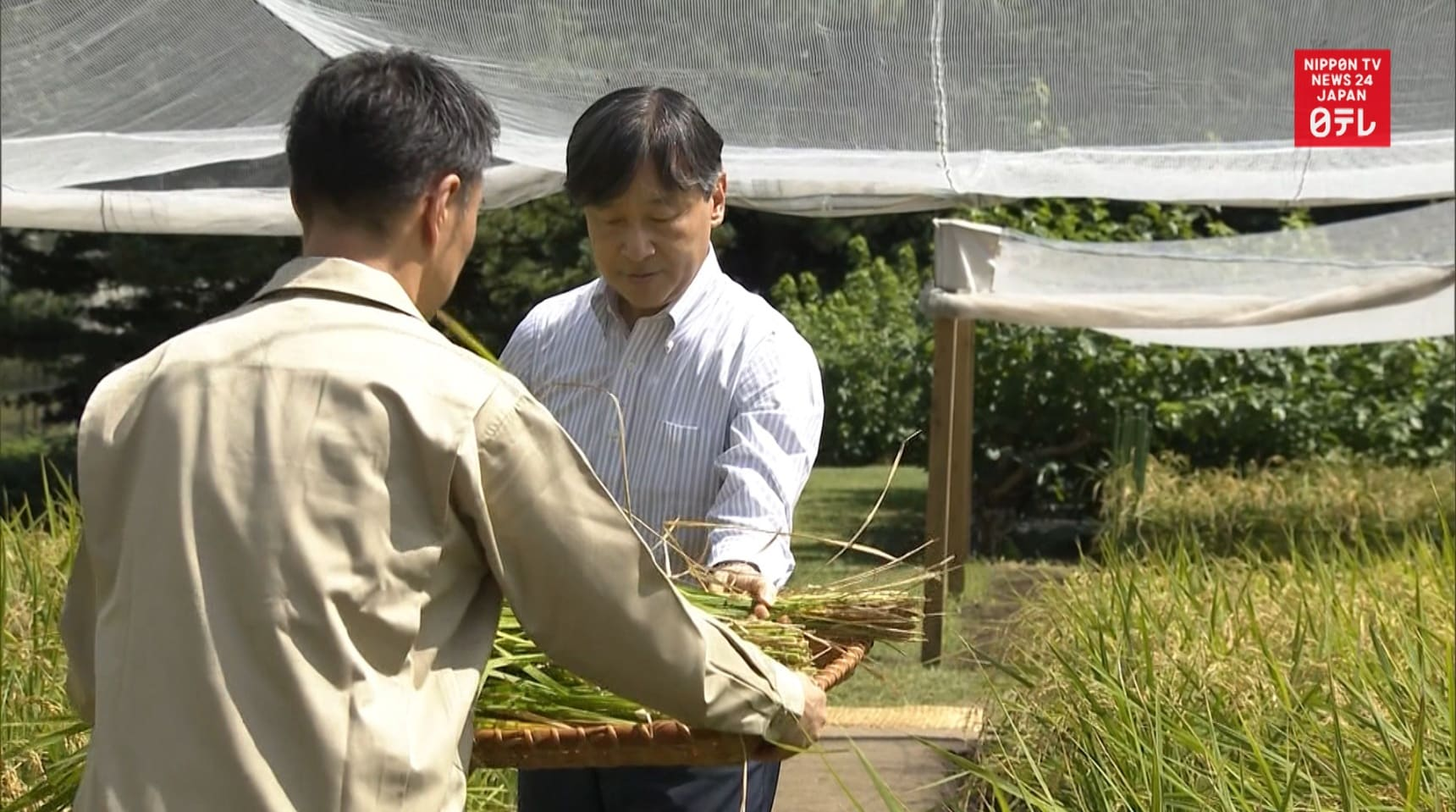 Emperor Naruhito Harvests First Rice