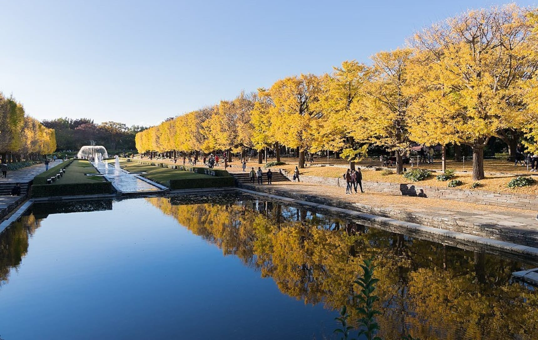 Top 10 Autumn Leaves Spots in Tokyo