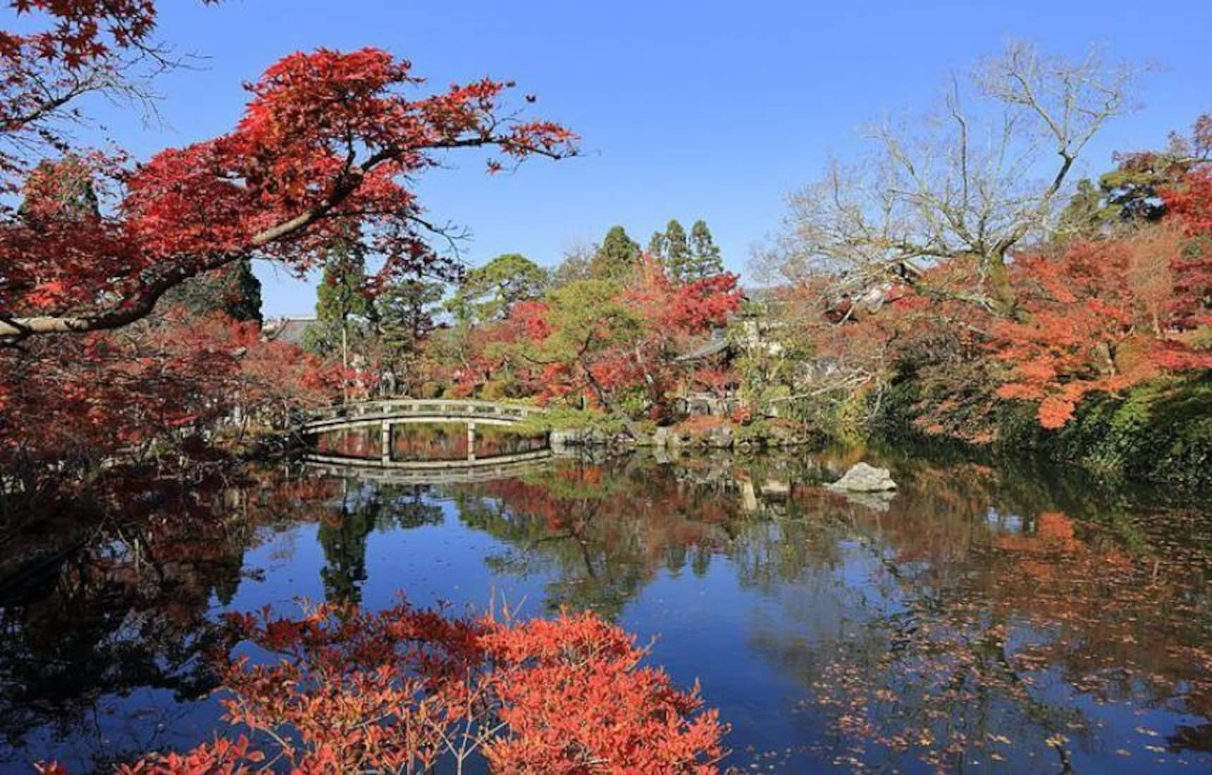 The Best Autumn Leaves Spot in Kyoto