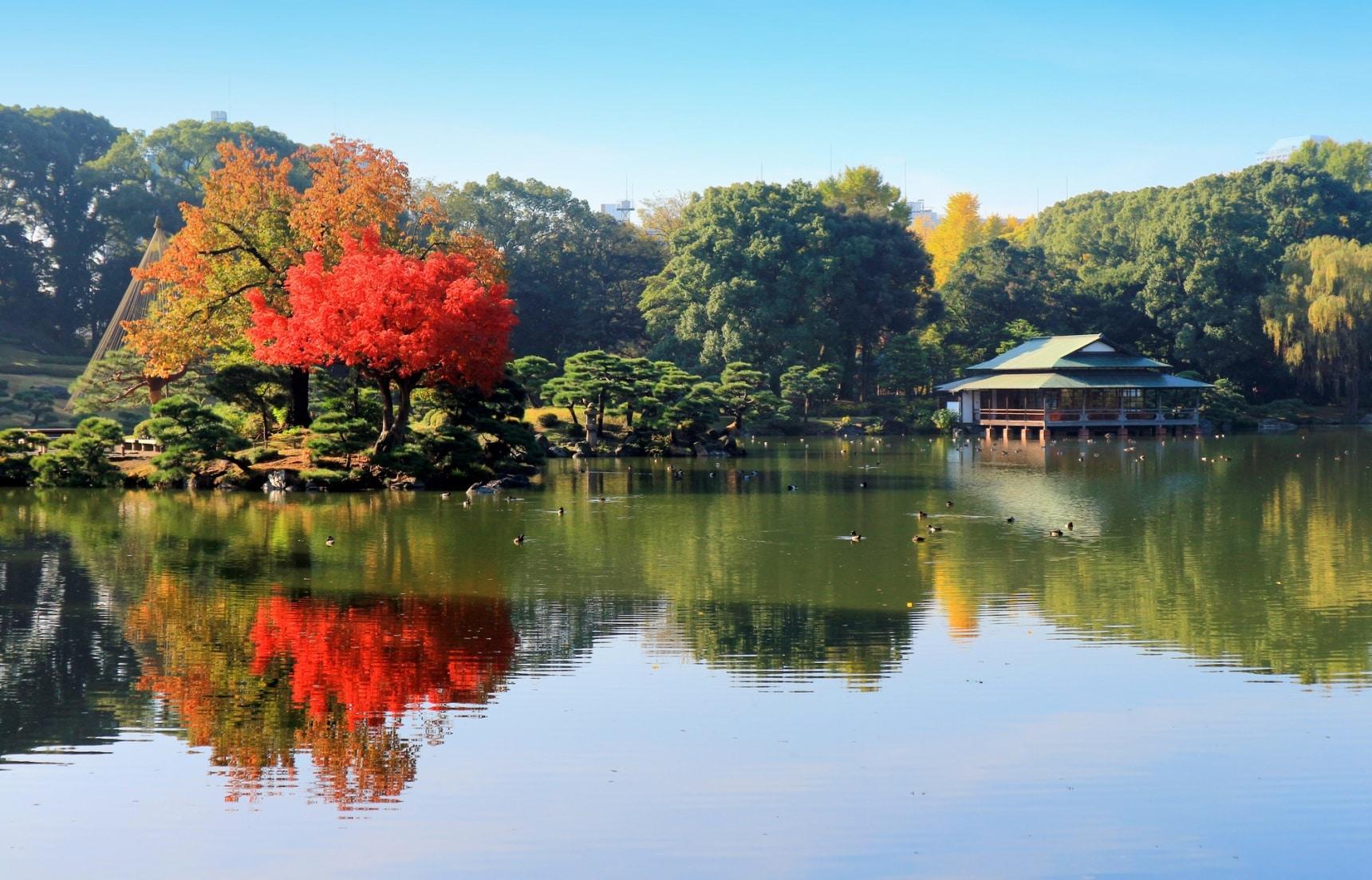 【東京自由行】享受被自然擁抱的靜謐東京旅行新提案