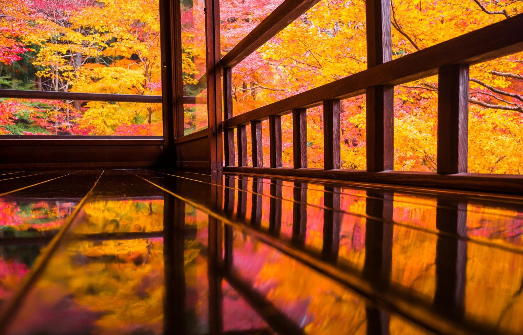 【京都賞楓】漫步瑠璃光院,目睹你從未見過的絕美紅葉美景