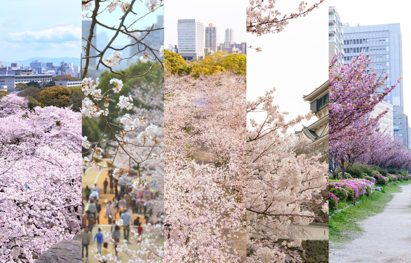 (2020) แนะนำจุดชมซากุระในฟุกุโอกะ