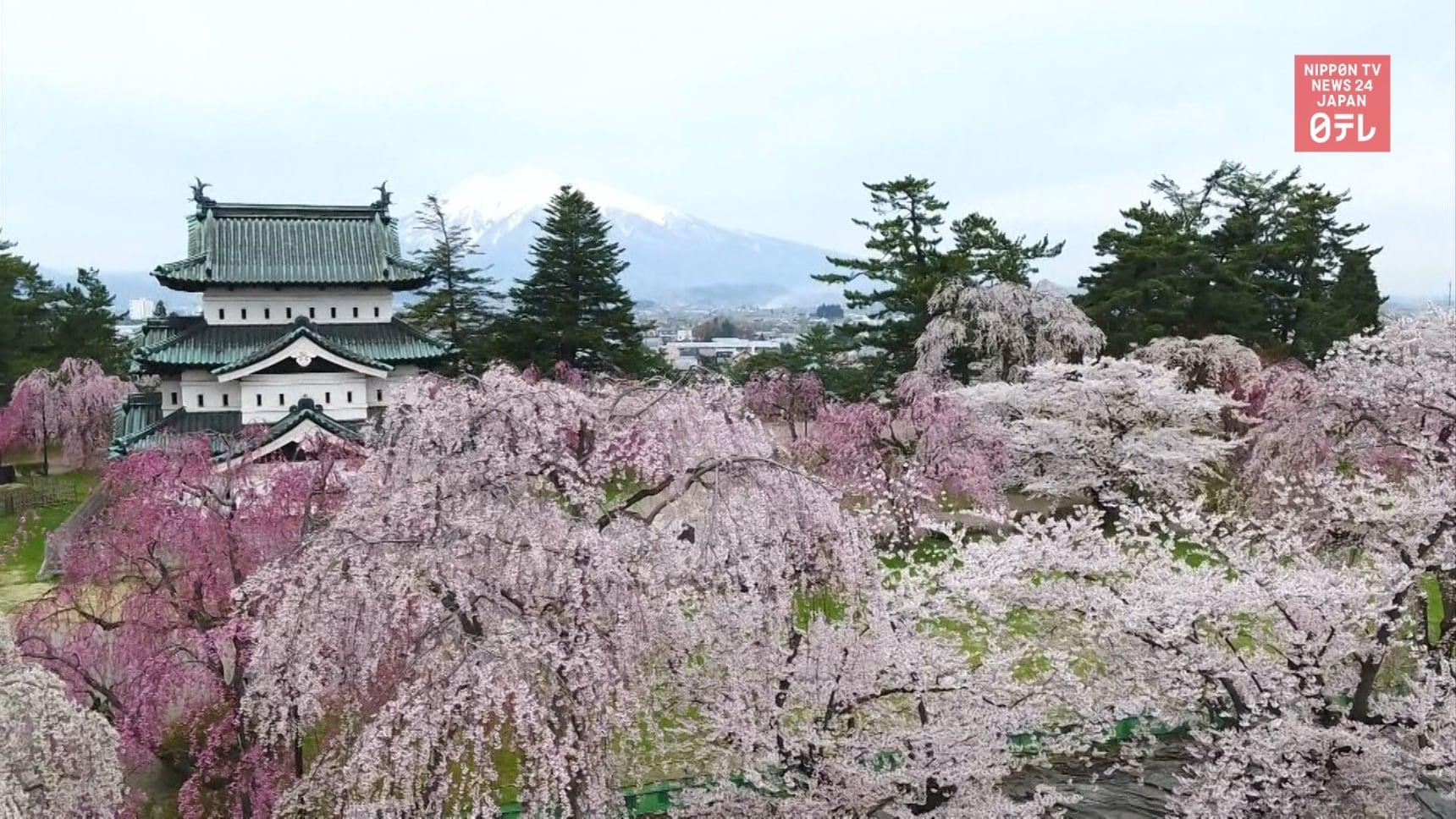 Aomori's Hirosaki Park Reopens