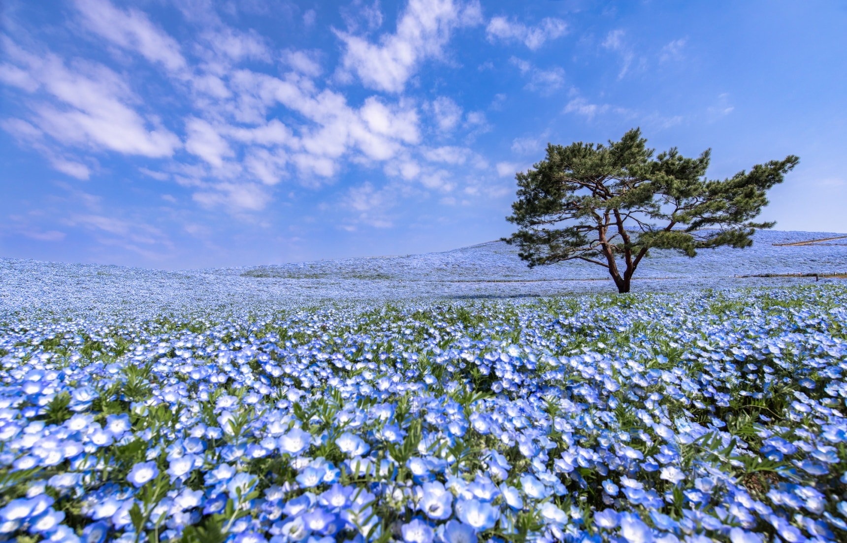 Enjoy Hitachi Seaside Park From Home