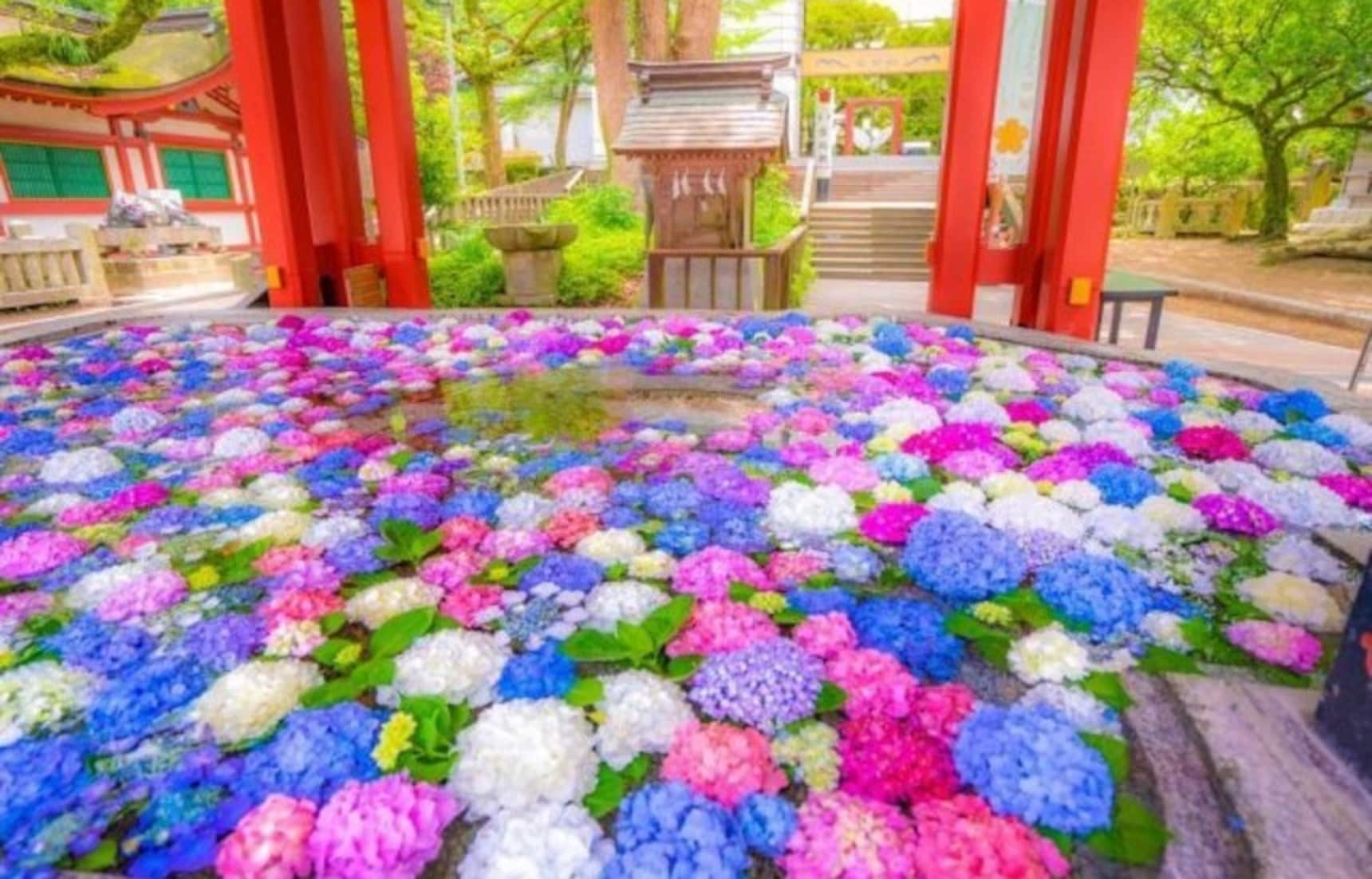 Shrines Transform With Colorful Flowers