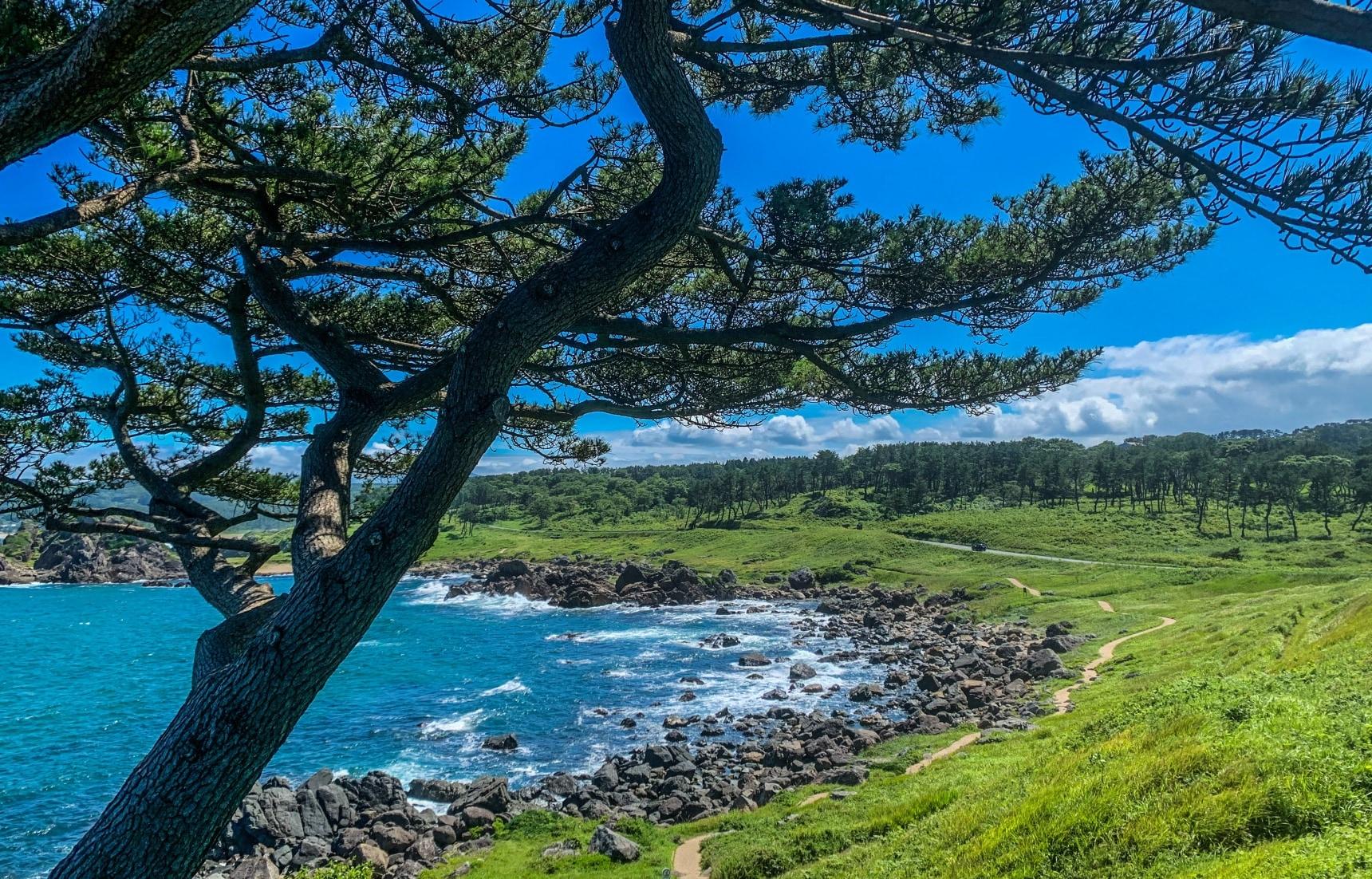 Walk Tohoku's Historic Michinoku Coastal Trail