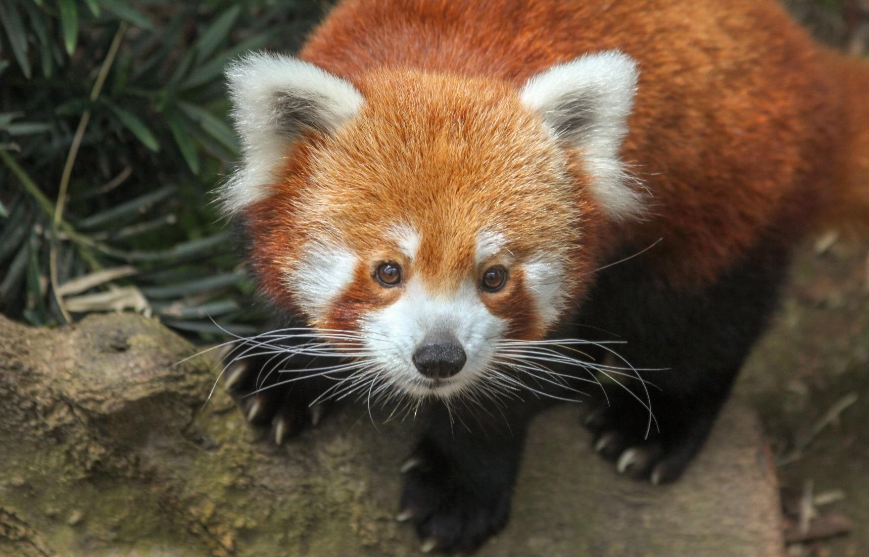玩转日本:这三所动物园&水族馆,绝不能错过!