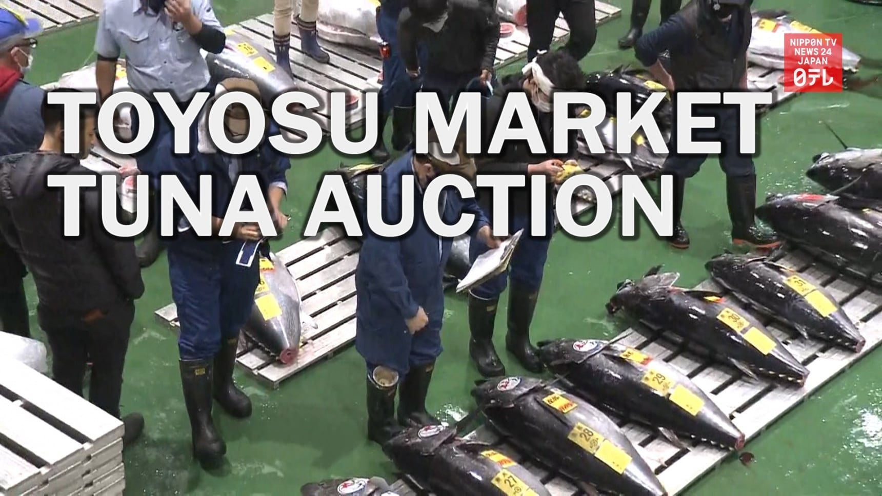 Toyosu Fish Market Resumes Public Viewings